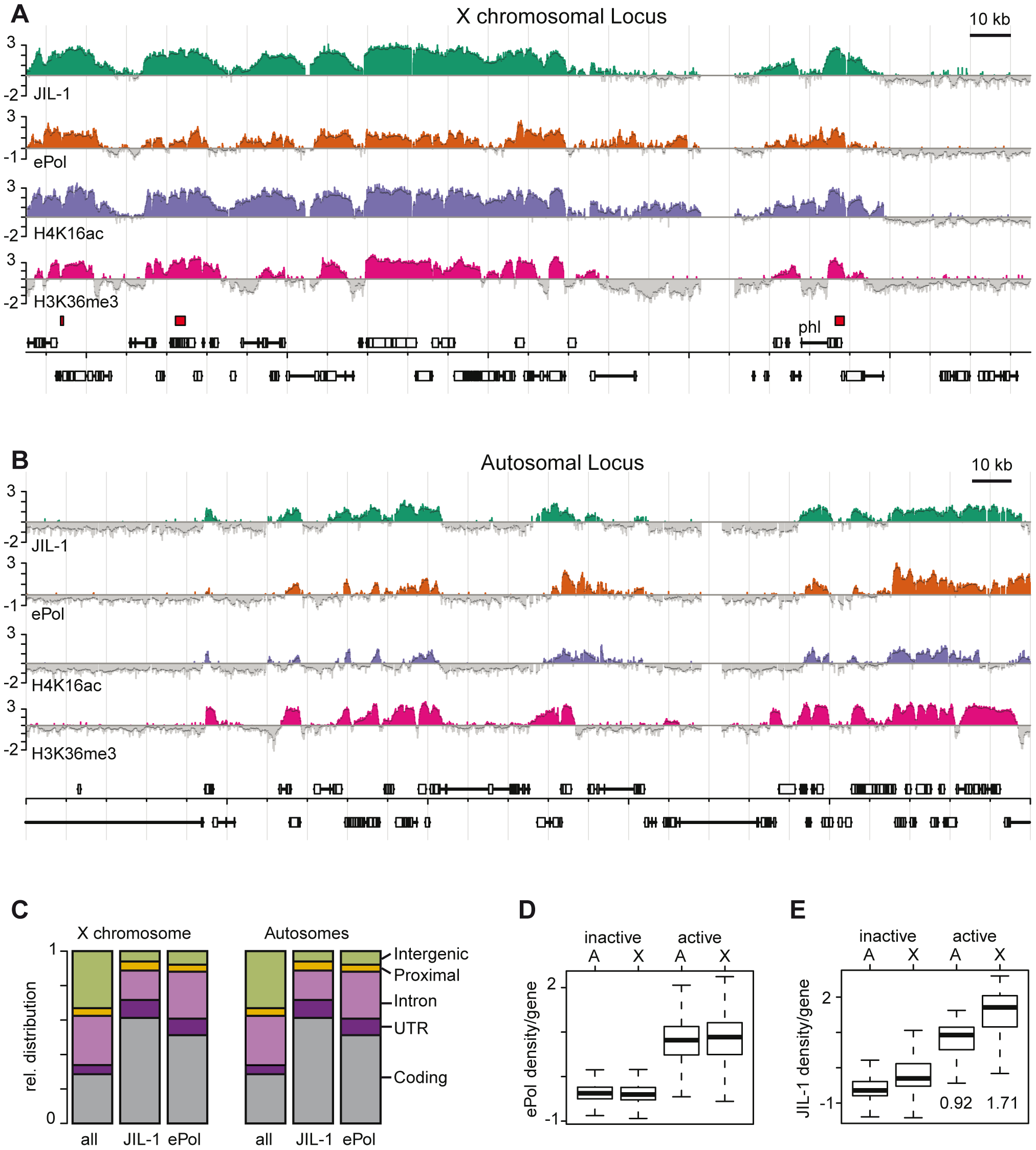 JIL-1 is a mark for gene activity and for dosage compensation in SL2 cells.