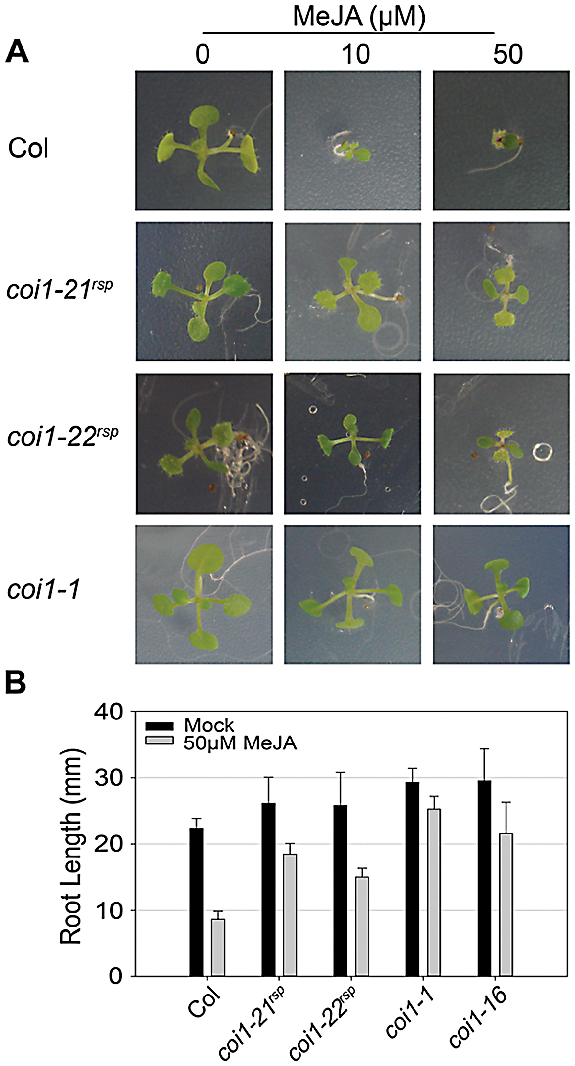 <i>coi1<sup>rsp</sup></i> alleles are insensitive to JA.