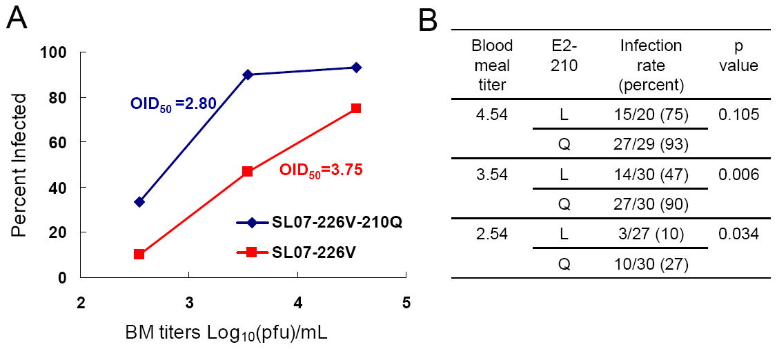 Effect of the E2-L210Q substitution on CHIKV infectivity for <i>A. albopictus</i>.