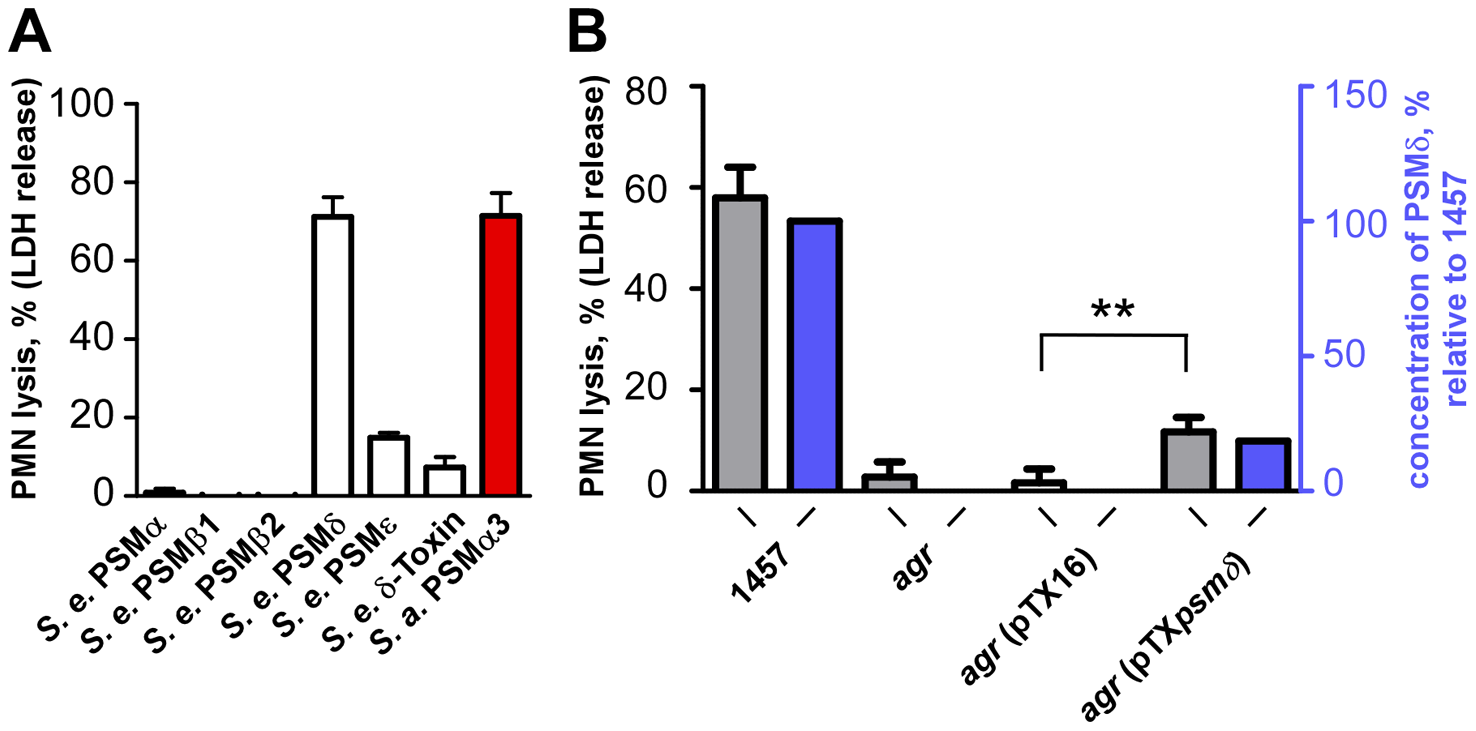 Neutrophil lysis by <i>S. epidermidis</i> PSM peptides and culture filtrates of PSMδ-expression strains.