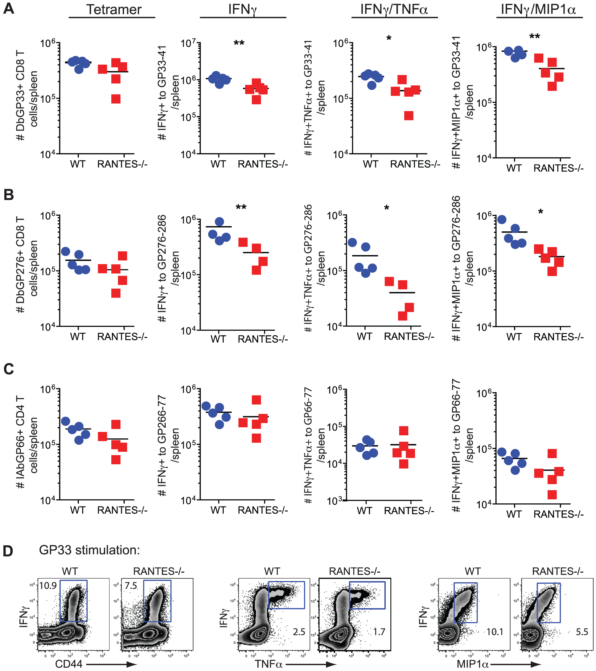 The primary CD8 T cell cytokine response is diminished in the absence of RANTES at one week after clone 13 infection.