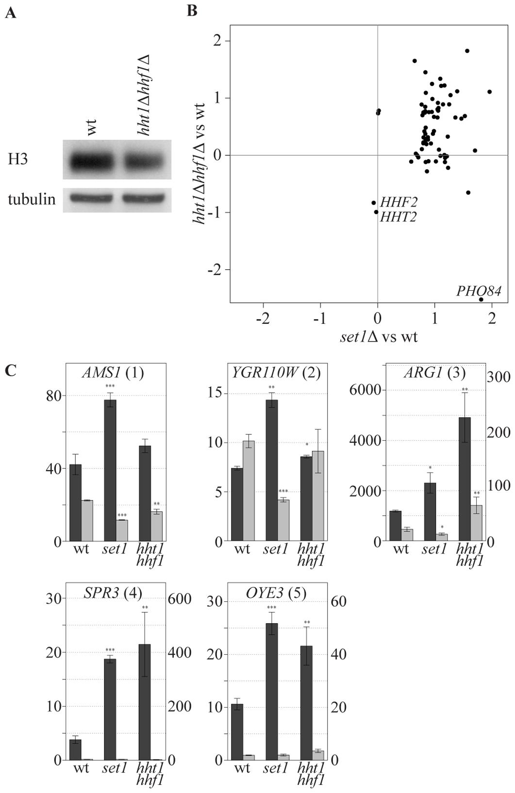 COMPASS-repressed genes are derepressed upon decrease in nucleosome content.