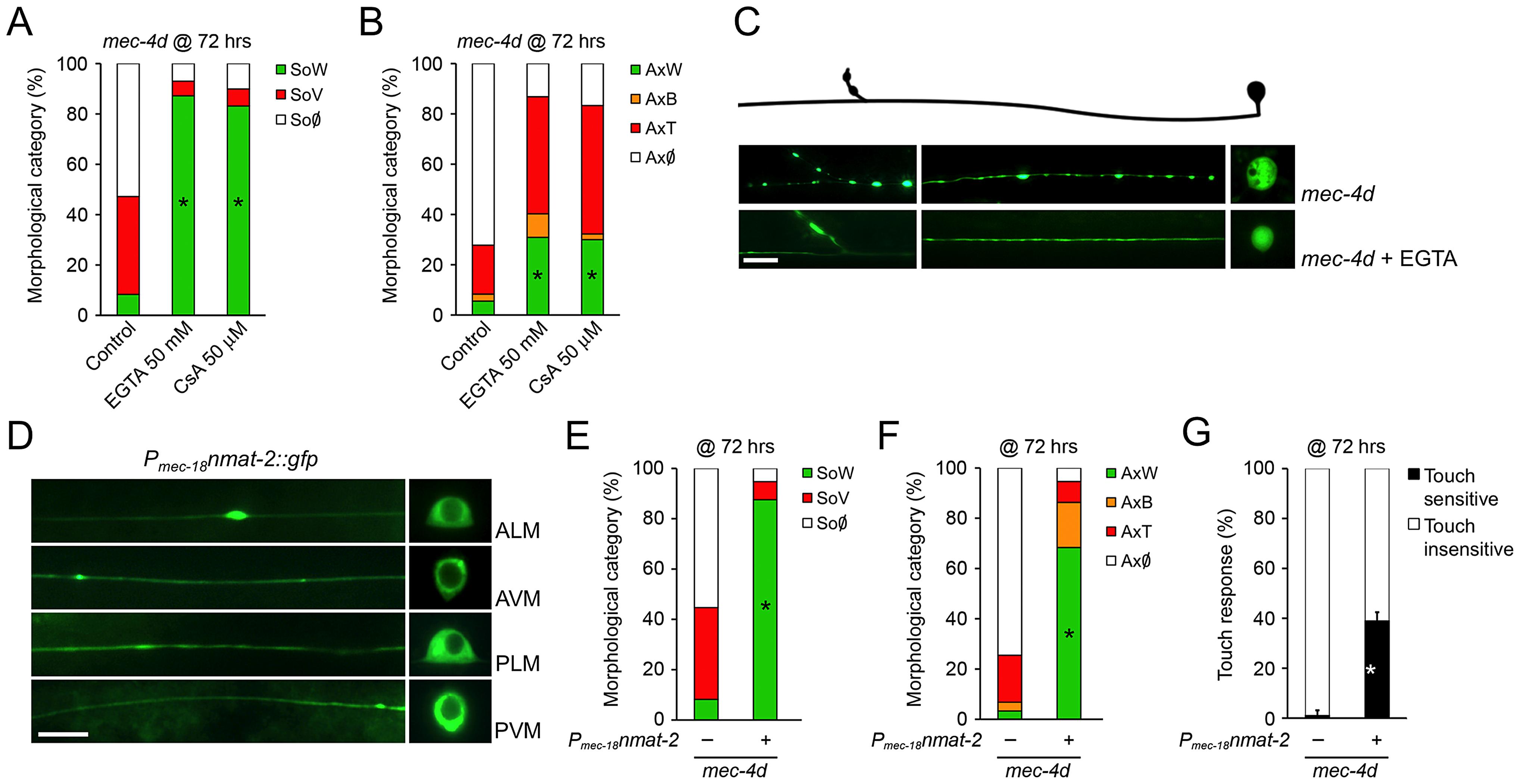 <i>C. elegans</i> and mammalian neurons share degenerative mechanisms triggered by diverse pro-degenerative stimuli.