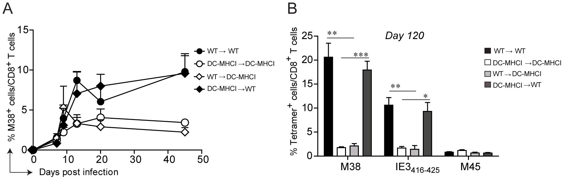 Restriction of antigen presentation to DCs abrogates memory inflation.