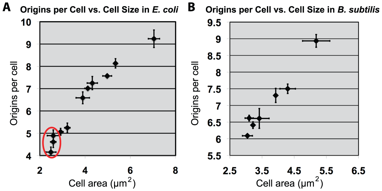 Increasing cell size results in proportional increase of initiations for both <i>E. coli</i> and <i>B. subtilis</i>.