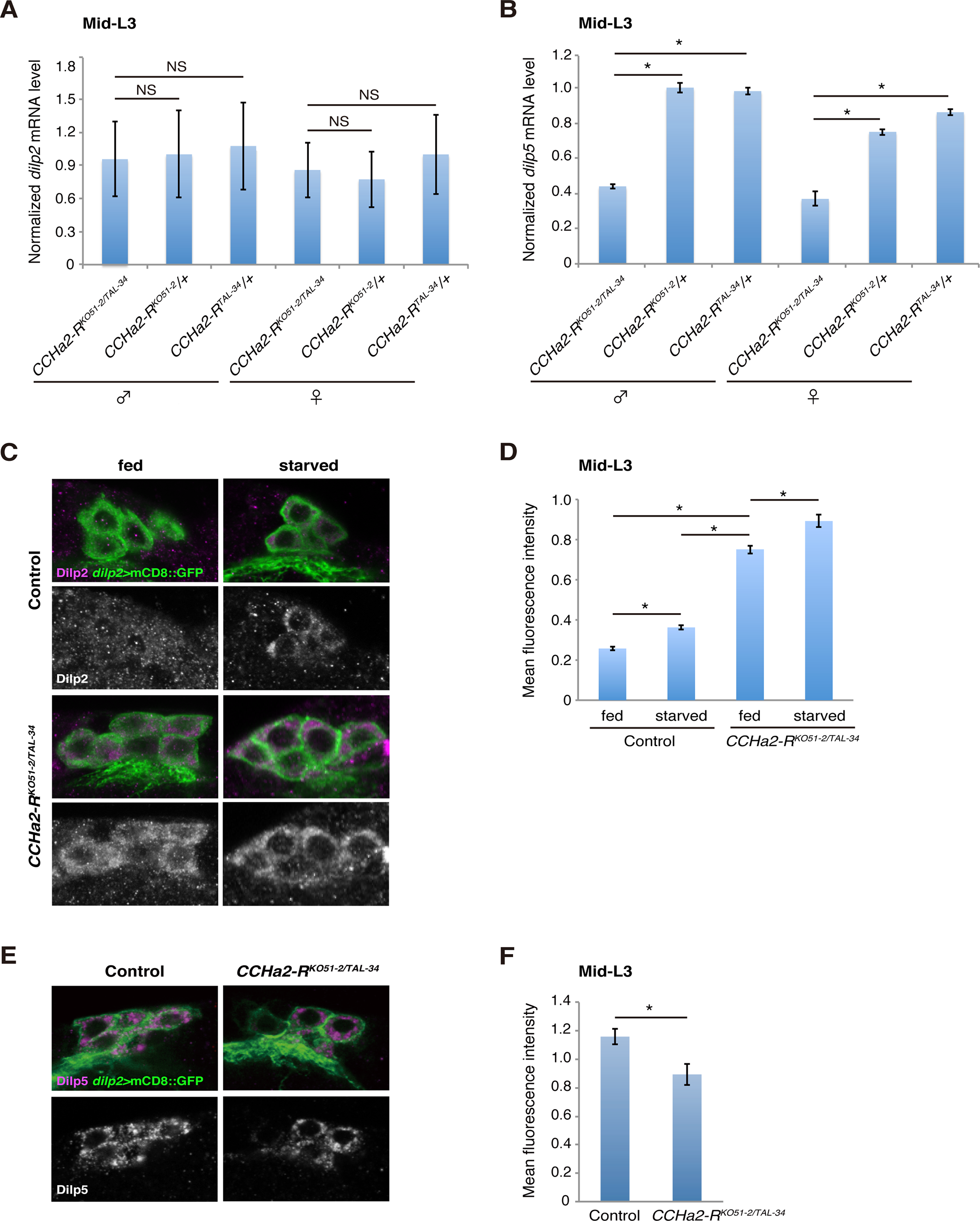 <i>CCHa2-R</i> mutations affect the production of Dilp2 and Dilp5 in IPCs.