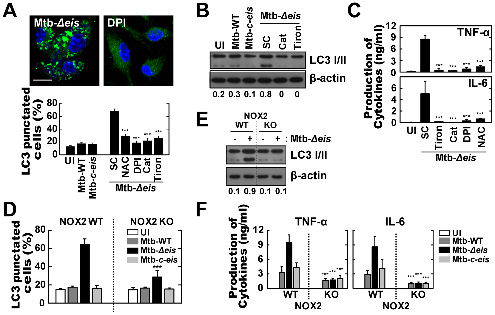 Increased ROS generation plays a critical role in autophagy and proinflammatory cytokine production in Mtb-<i>Δeis</i>-infected macrophages.