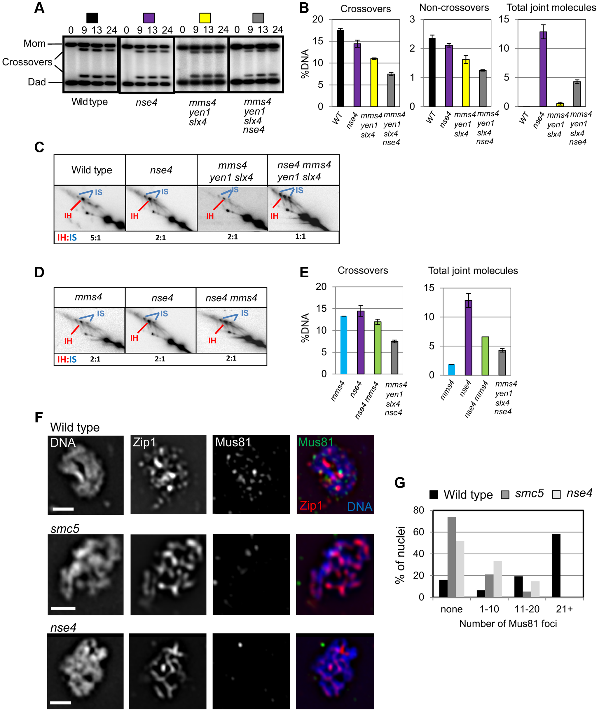 Smc5/6 regulates joint molecule resolution by Mus81-Mms4.