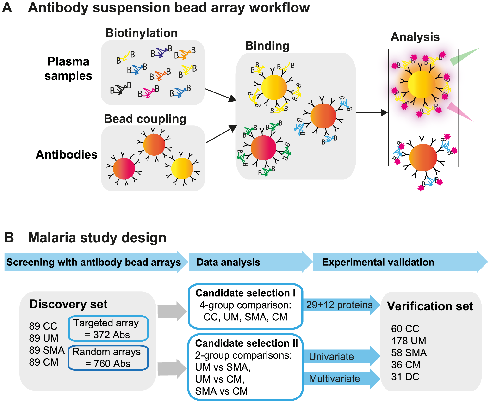 Overview of affinity proteomics screening and study design.