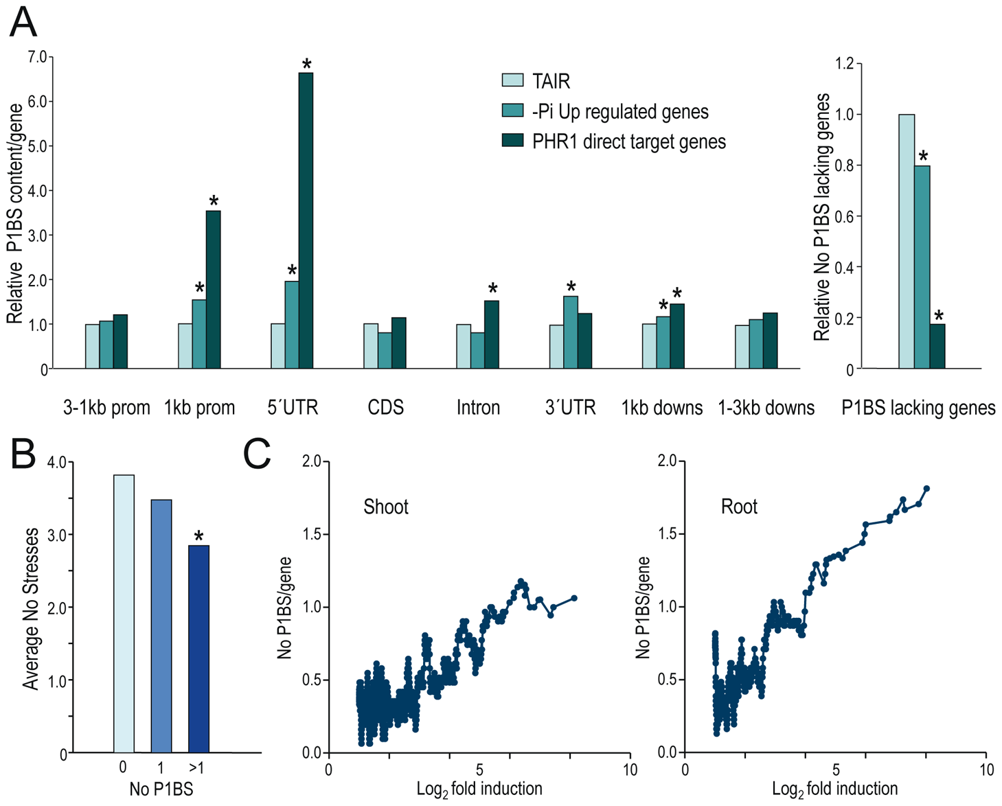 P1BS distribution over different gene parts of PHR1 direct targets and Pi starvation-responsive genes.