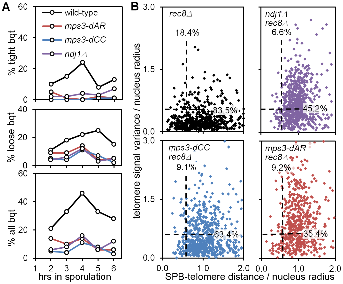 <i>mps3-dCC</i> and <i>mps3-dAR</i> are defective in bouquet formation and display altered patterns of telomere clustering and distribution relative to the SPB.