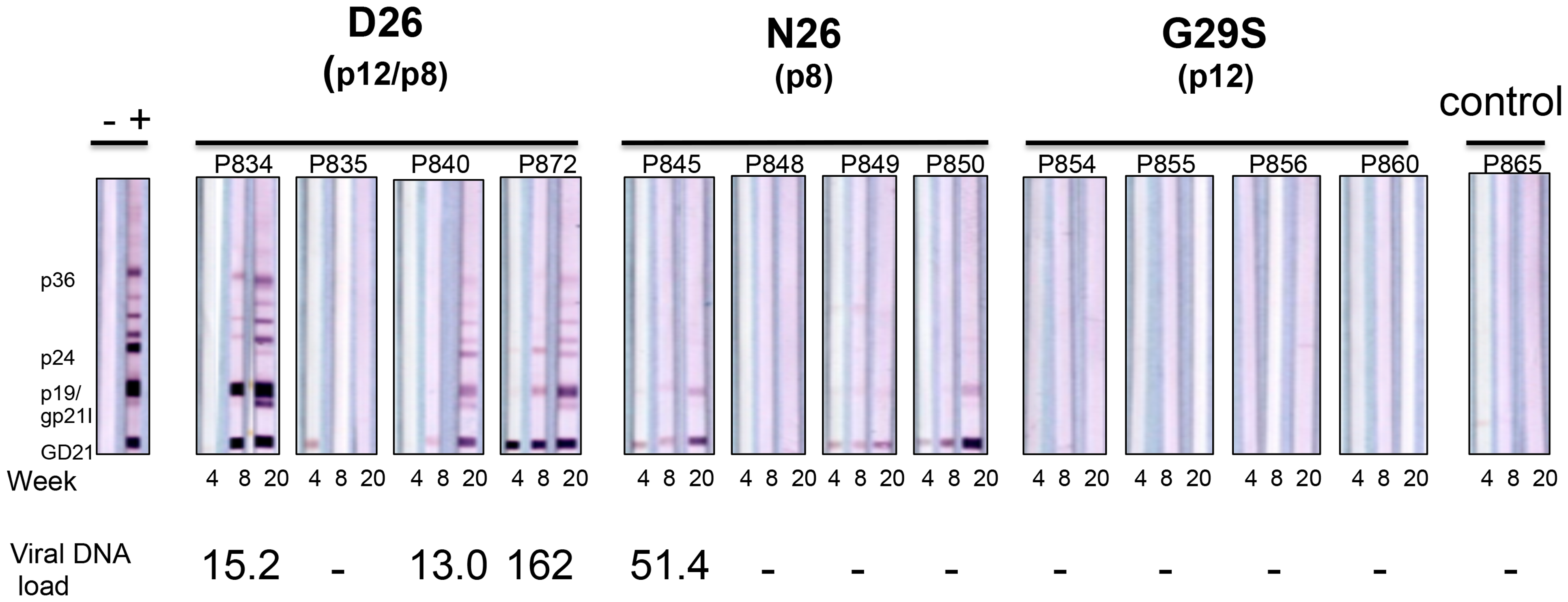 D26, N26, and G29S infectivity in macaques.