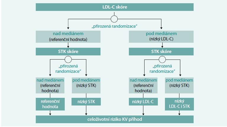 """Schéma. V """"přirozeně randomizované studii"""" jsou pacienti rozděleni do skupin dle toho, zda mají na základě genetických polymorfizmů v porovnání s mediánem vyšší nebo nižší krevní tlak (STK skóre) a LDL-cholesterol (LDL-C skóre)"""
