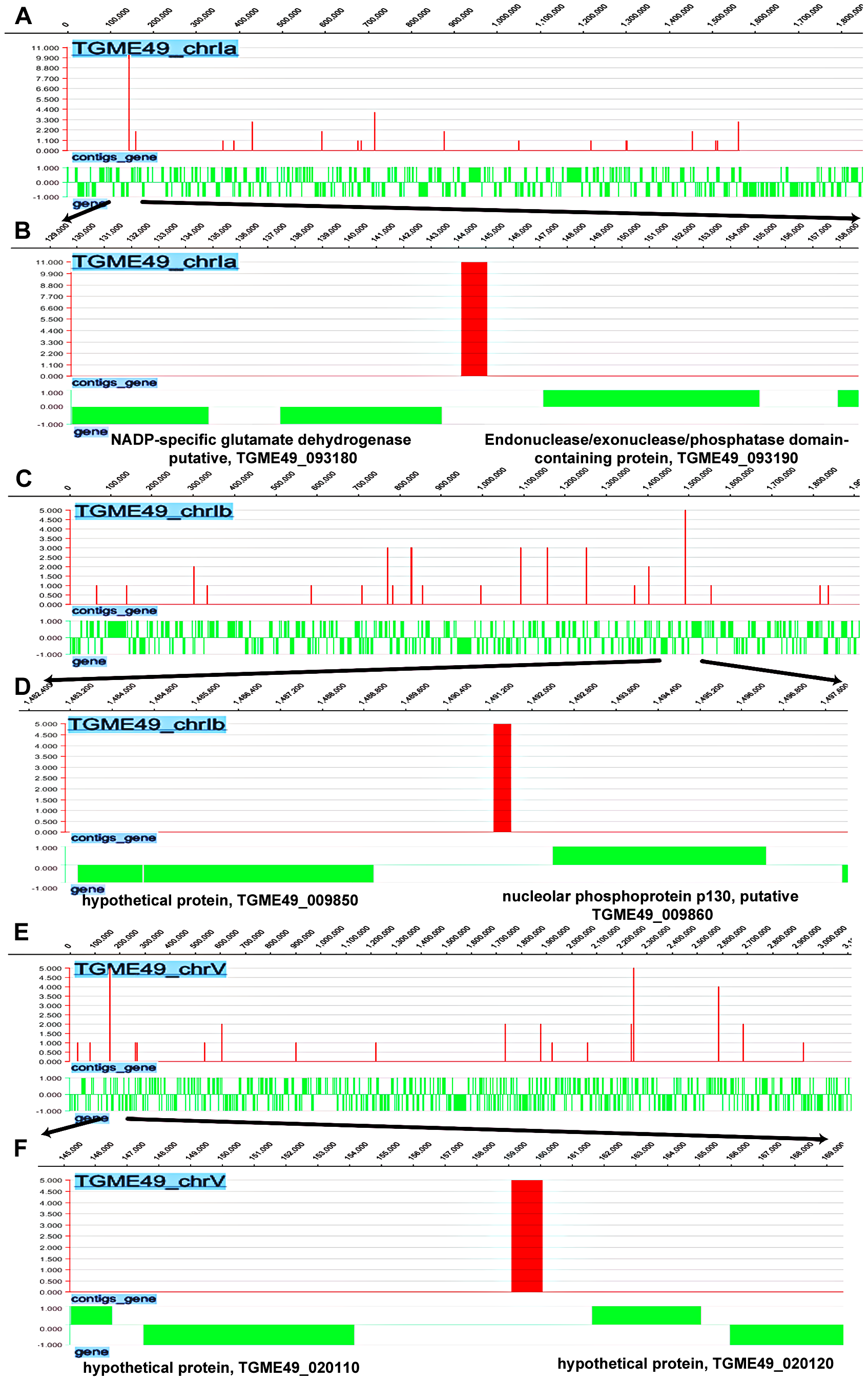 Genome-wide TgNF3 occupancy of gene promoters by ChIP-seq.