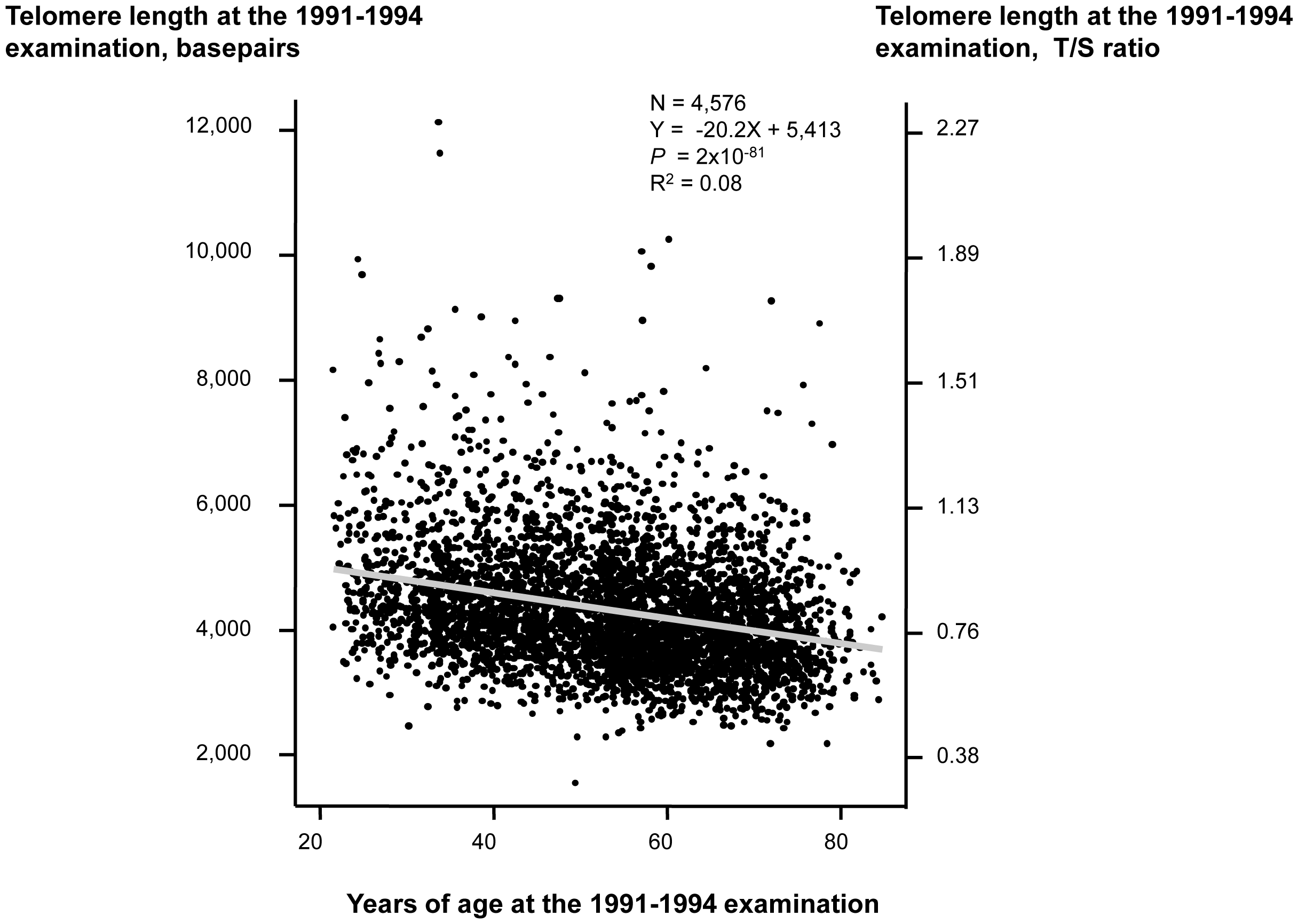 Telomere length in basepairs as a function of age in years at the 1991–1994 examination.