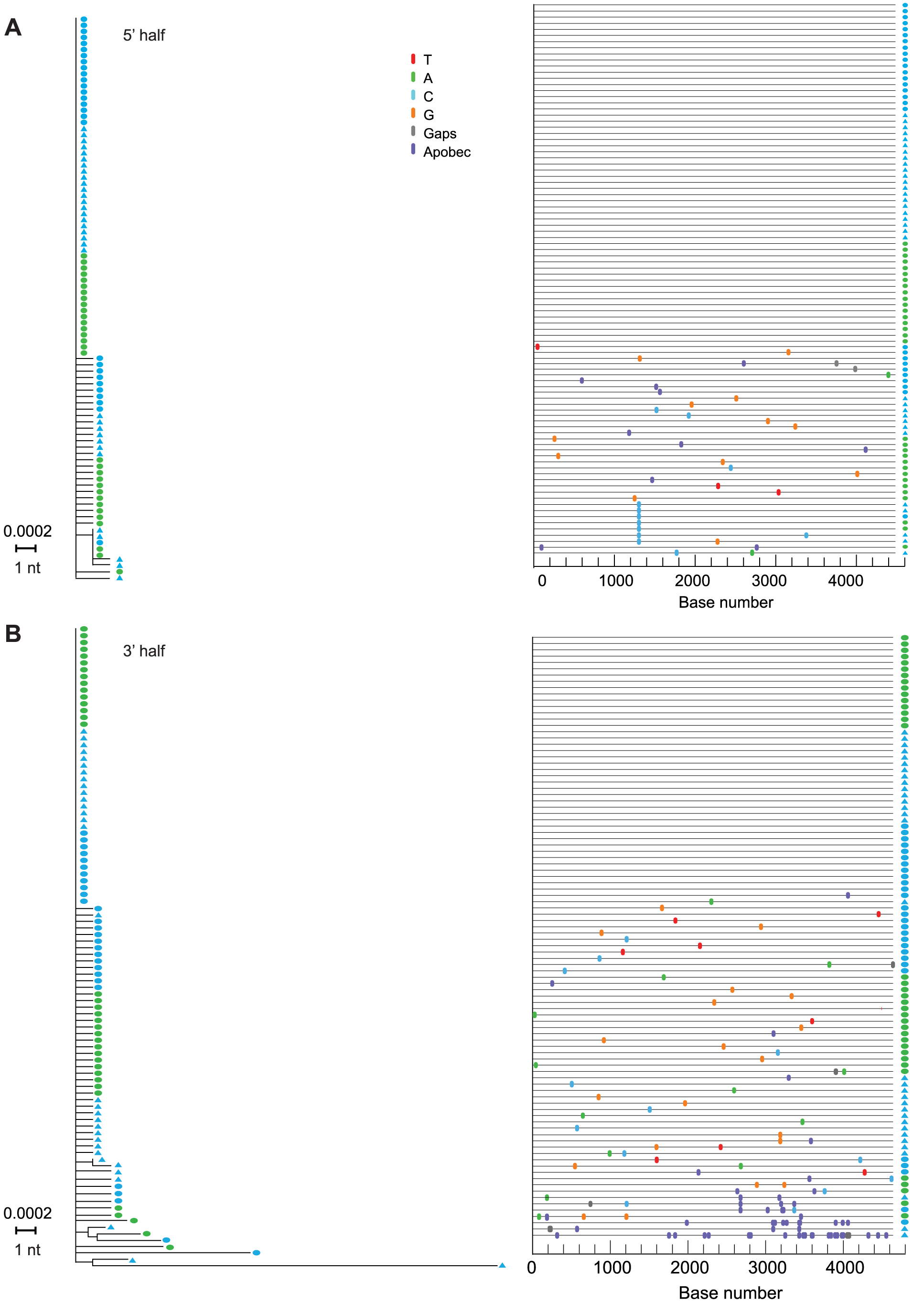 NJ trees and Highlighter plots of HIV-1 diversity in 5′ and 3′ half genomes in subject AD17.