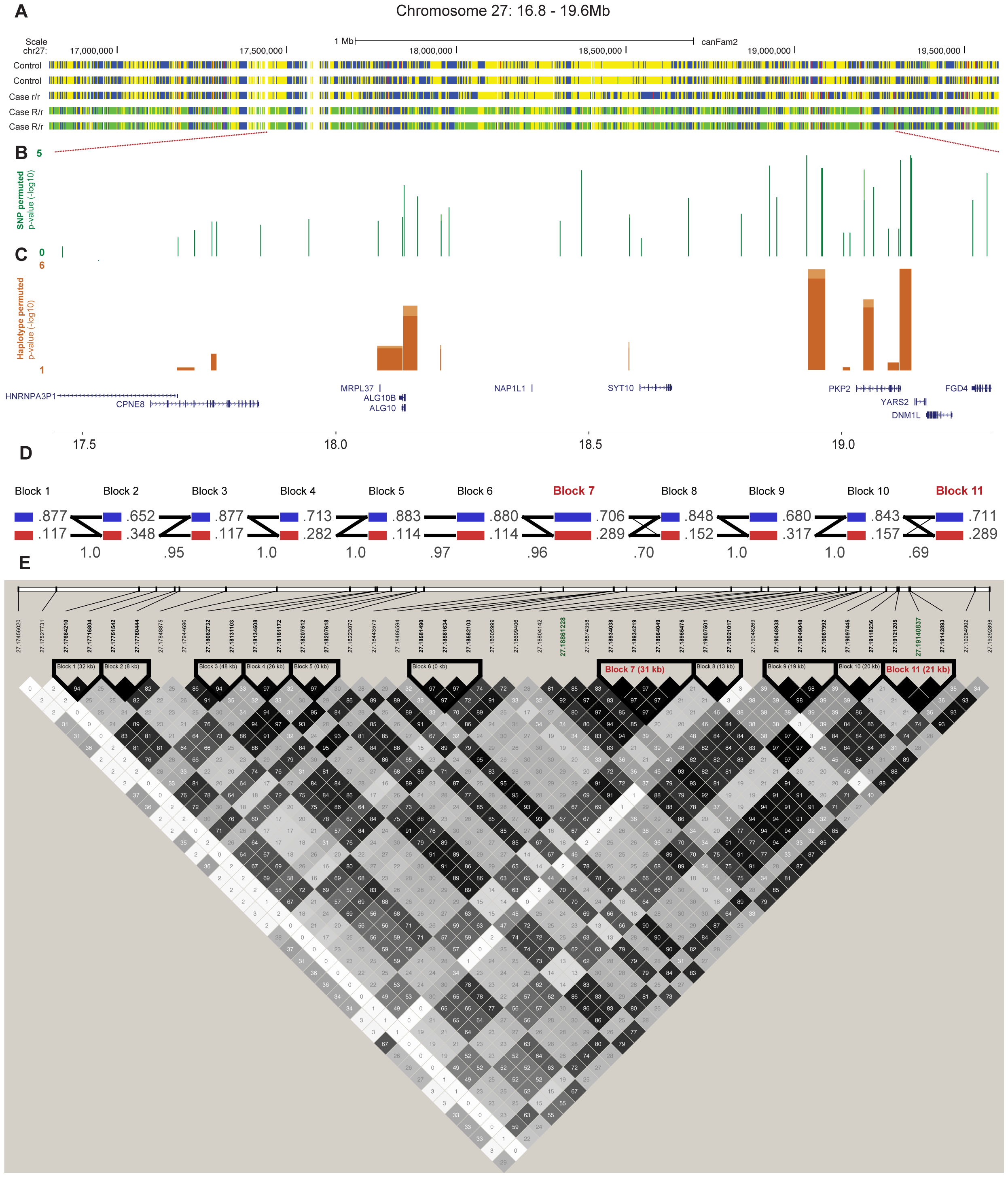 Fine-mapping of the chromosome 27 locus confirms the association with CAD and further pinpoints the region around the <i>PKP2</i> gene.