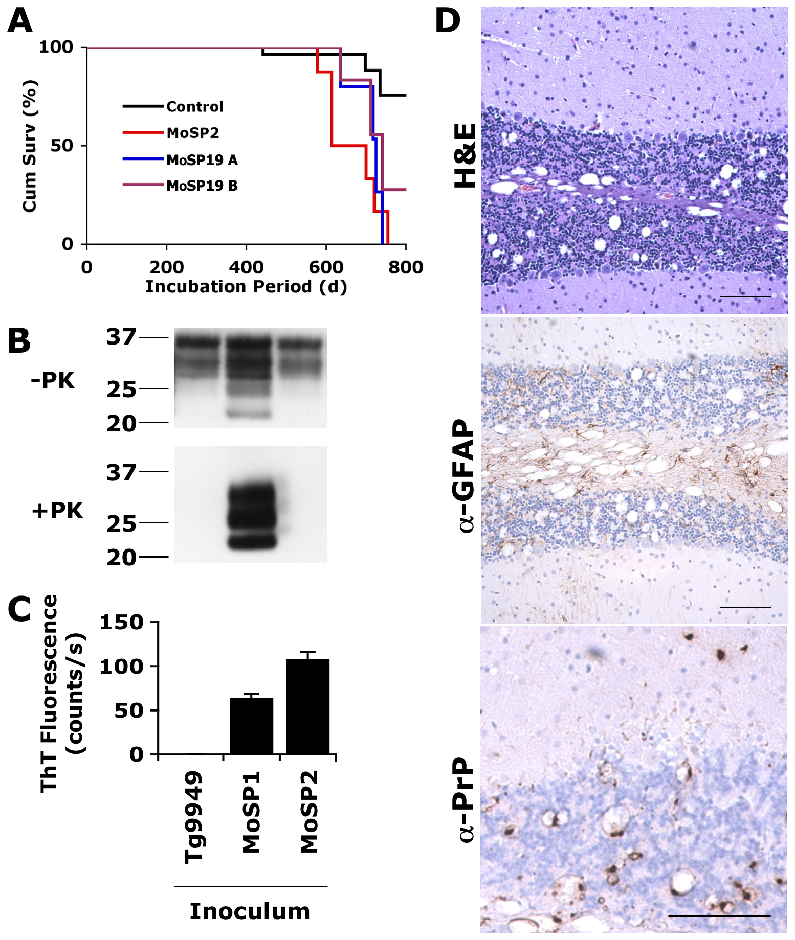 Protease-sensitive synthetic prions are serially transmissible to Tg4053 mice.