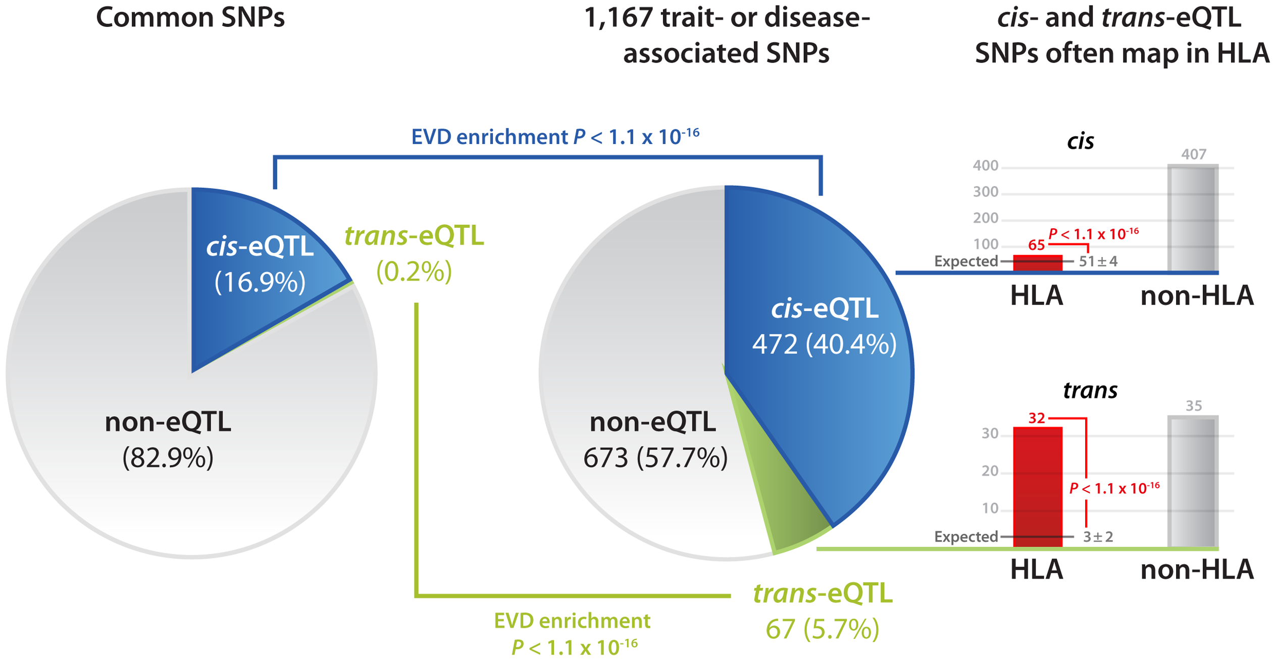 Disease and trait-associated SNPs are enriched for both <i>cis</i>- and <i>trans</i>-eQTLs.