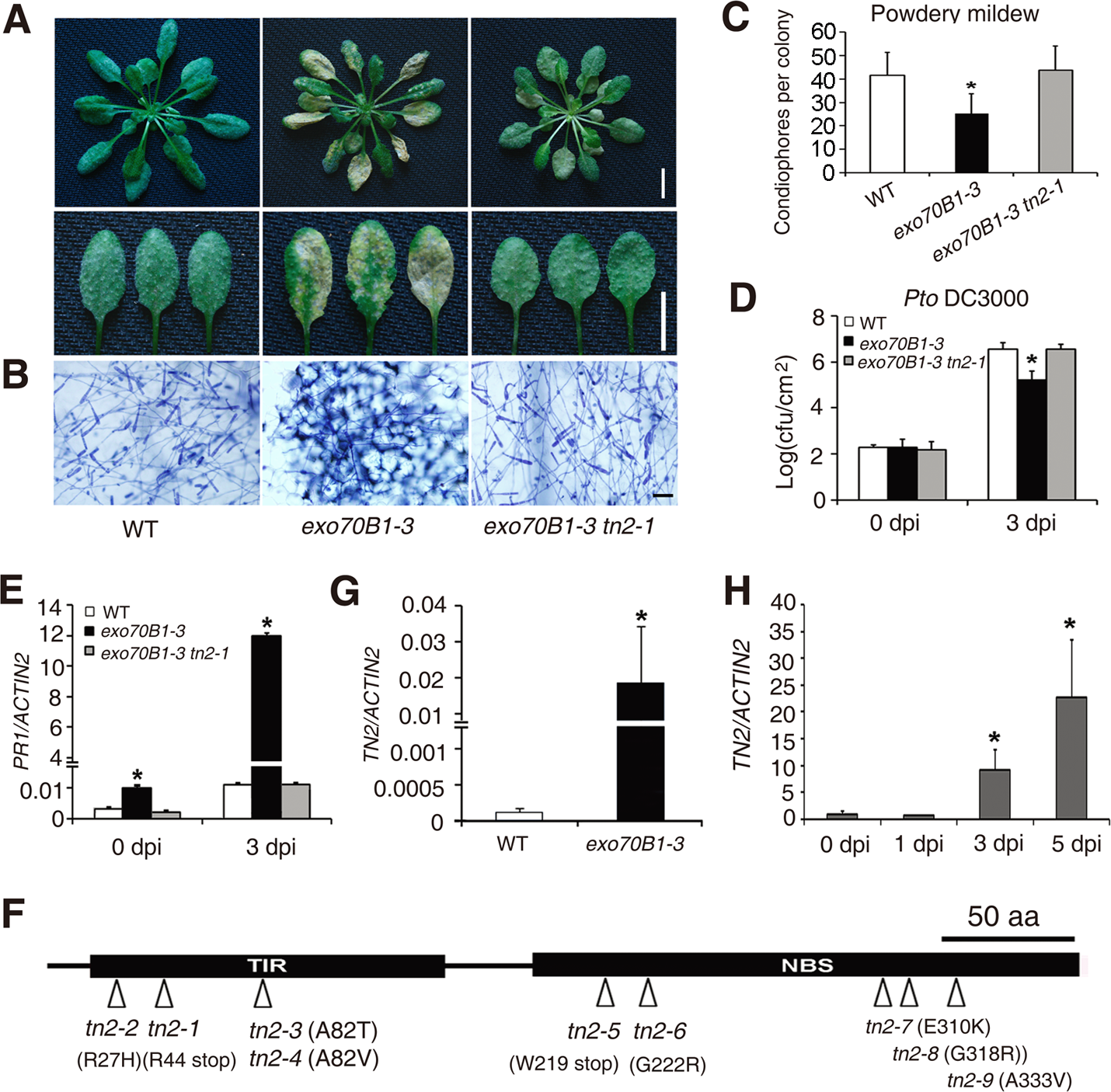 <i>exo70B1</i>-mediated resistance and cell death require the TIR-NBS protein TN2.