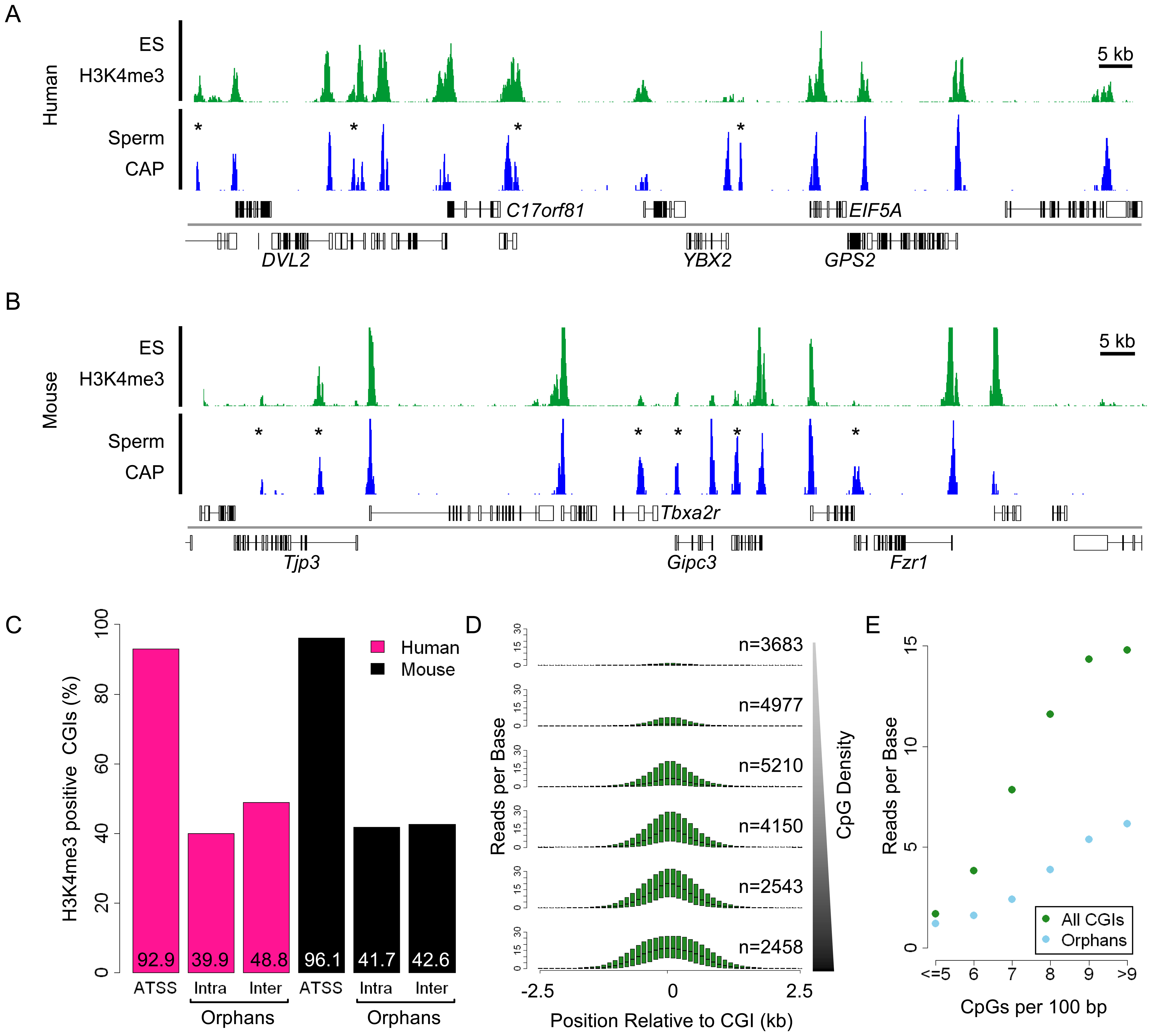 Trimethylated H3K4 is the signature chromatin mark at CGIs and is grossly proportional to CpG density.
