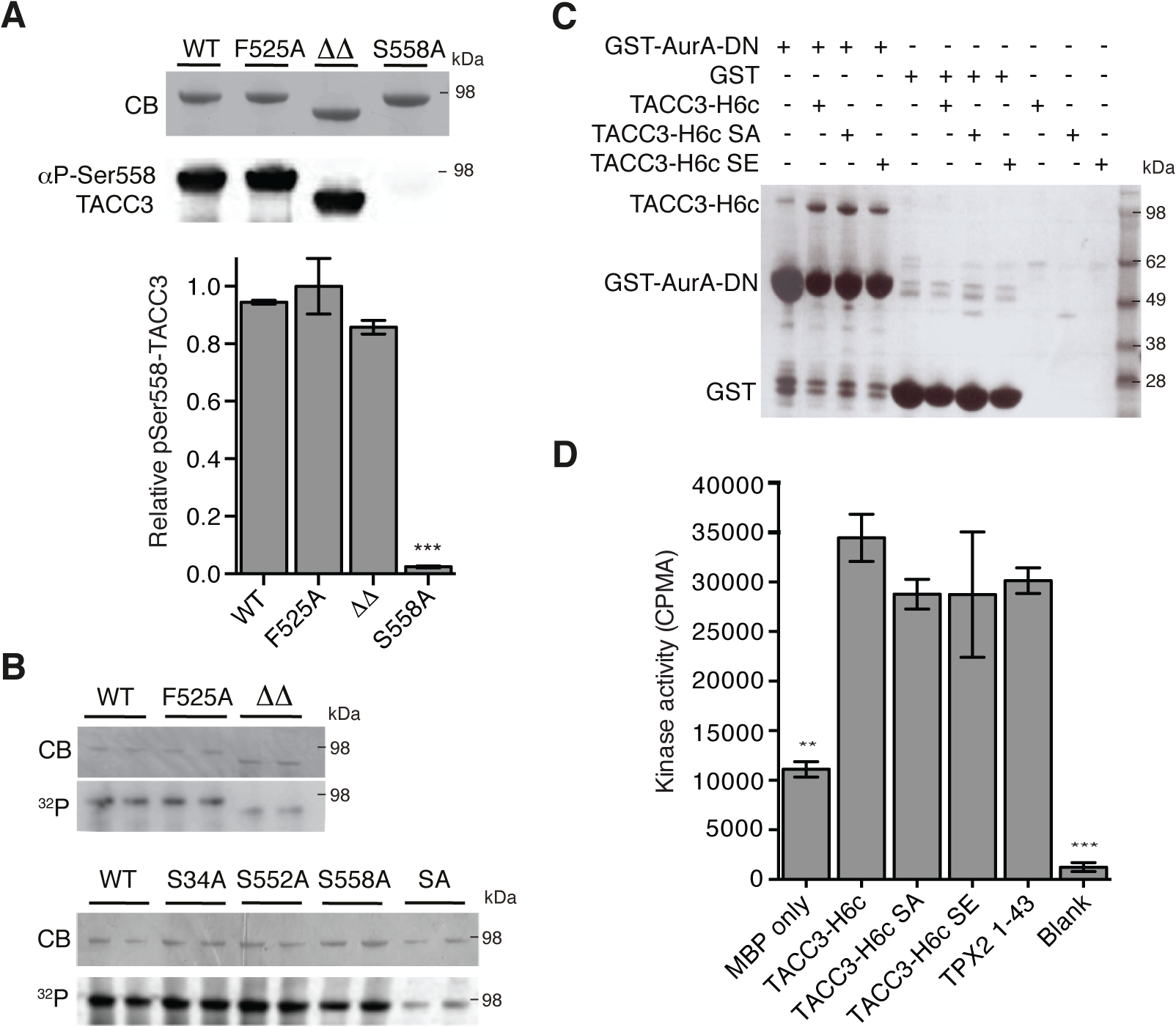 Biochemical characterisation of TACC3 mutants defective in either Aurora-A phosphorylation or activation.