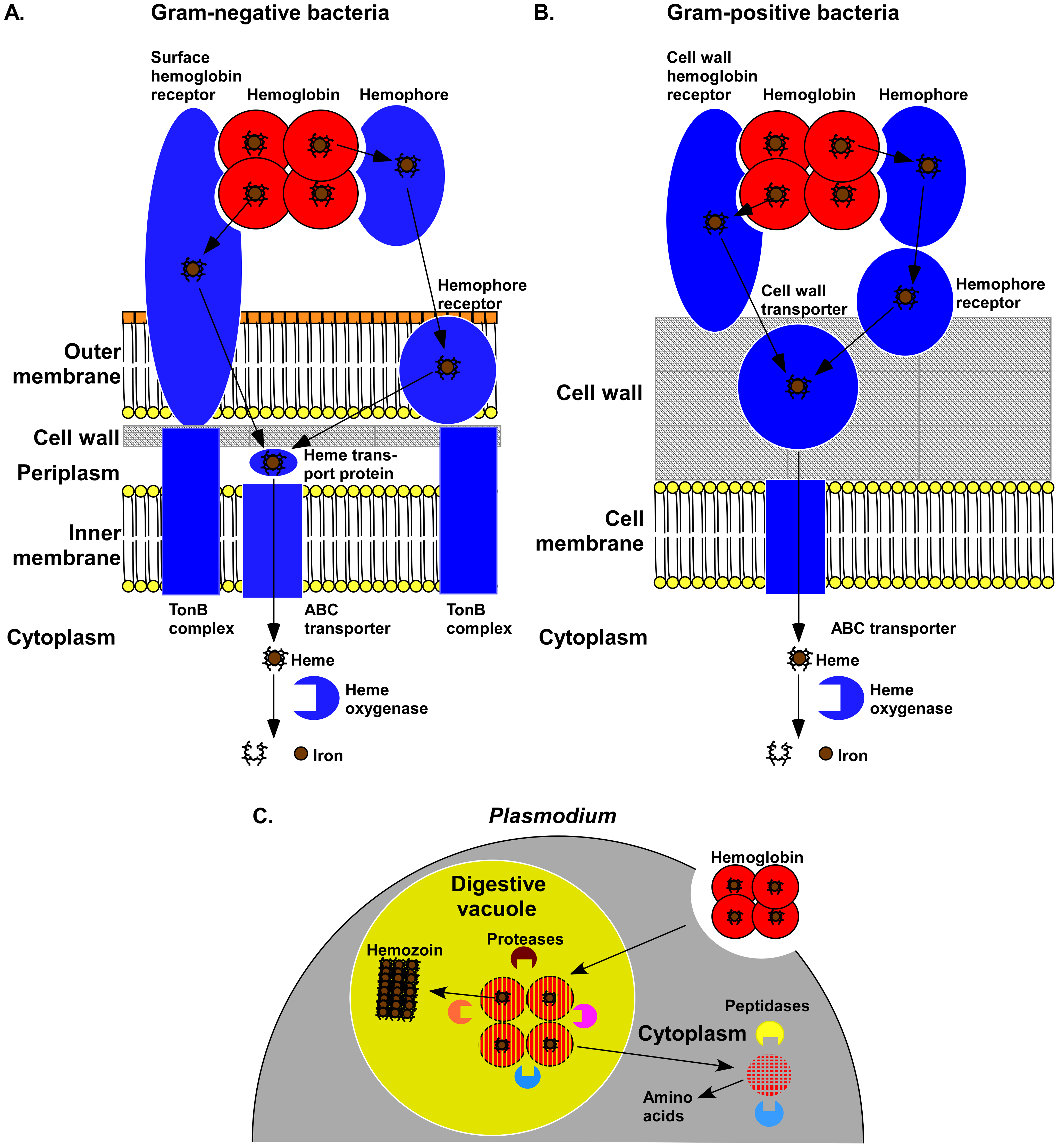 Mechanisms of hemoglobin utilization by pathogens.