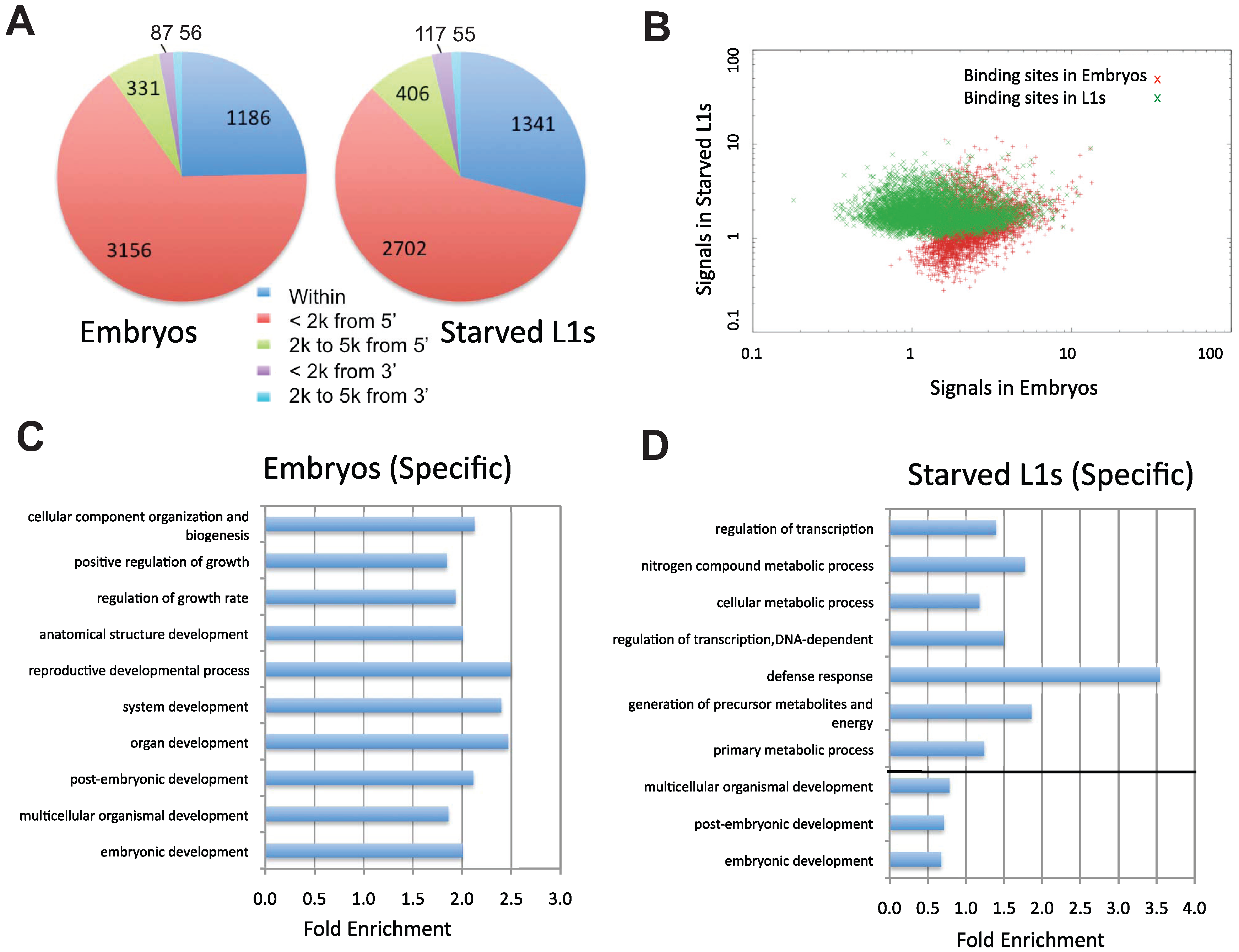 Characterization of PHA-4 binding patterns and gene targets.