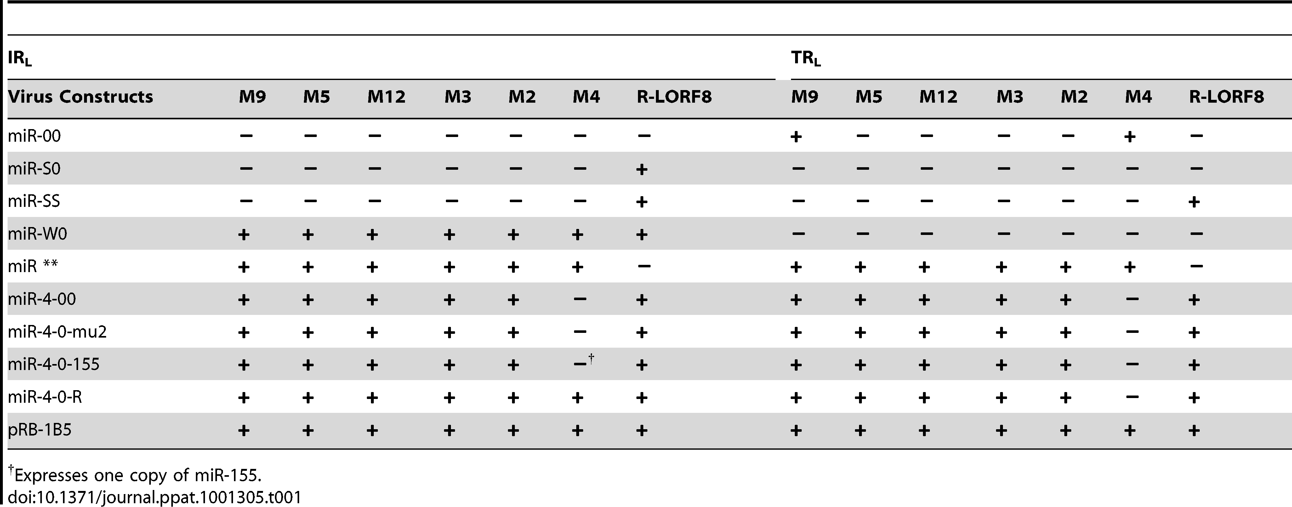 Profile of the expression of miRNAs and R-LORF8 in different constructs.