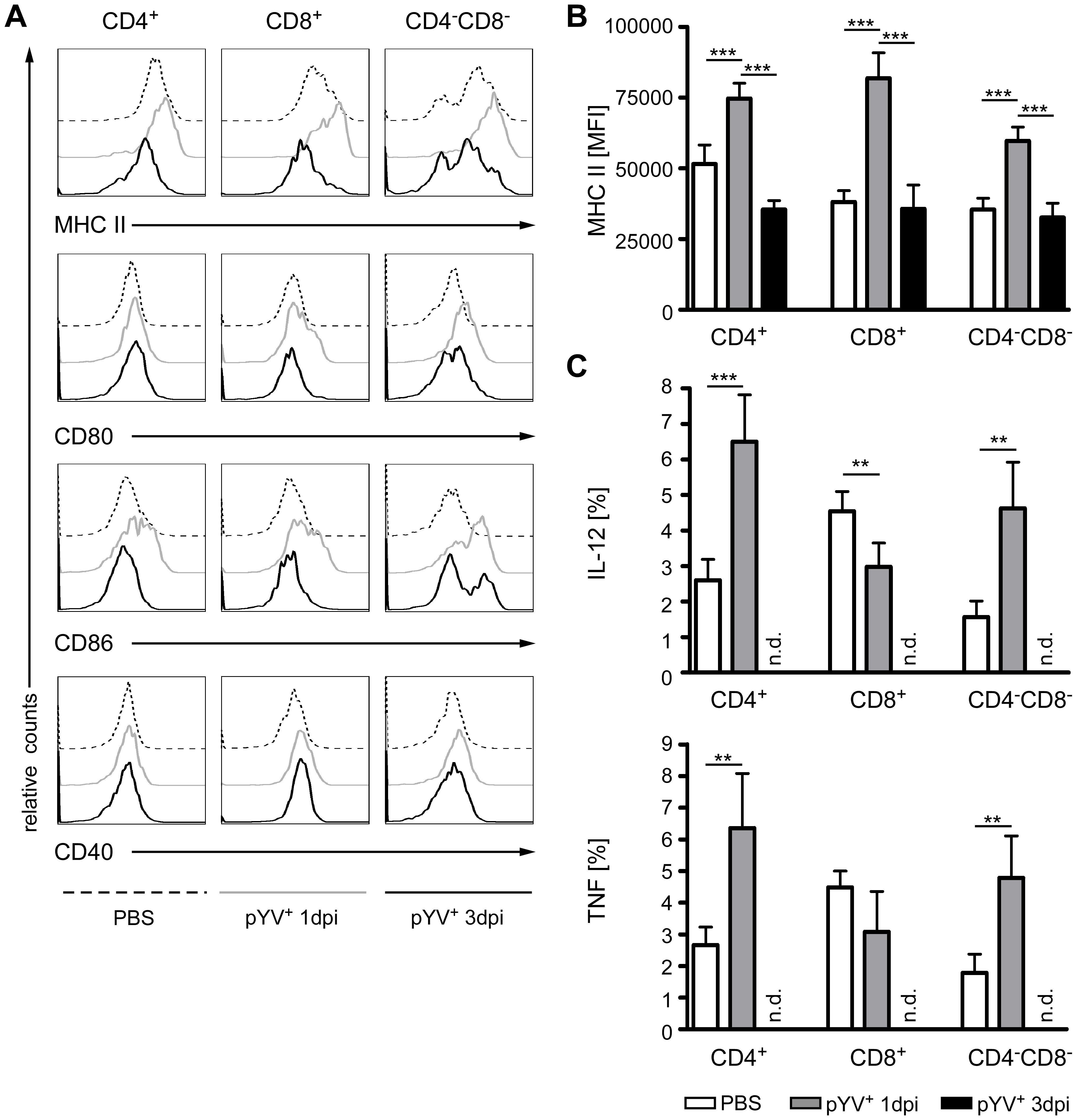 Analysis of DC maturation and cytokine production in mice infected with Ye.