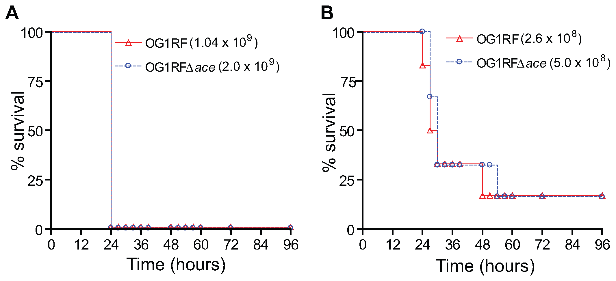 Kaplan-Meier survival plots of wild-type OG1RF and the <i>ace</i> mutant in the mouse peritonitis model.