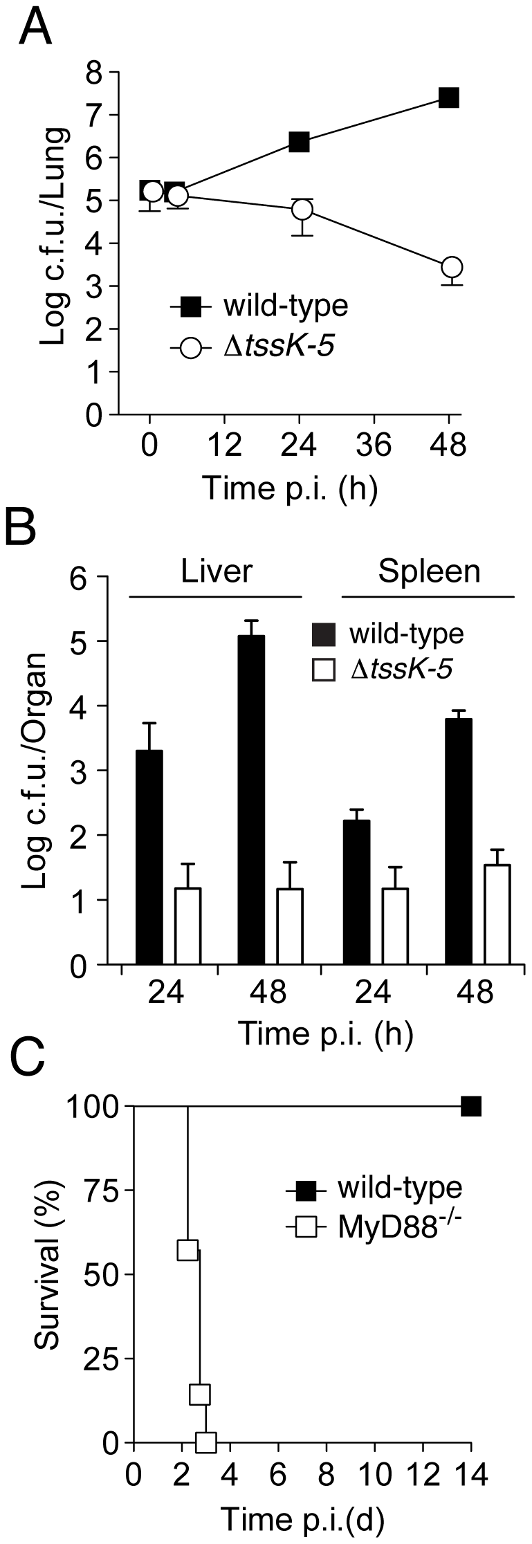 <i>B. thai</i> Δ<i>tssK-5</i> shows a replication defect in the lung of wild-type mice but is highly virulent in MyD88<sup>−/−</sup> mice.