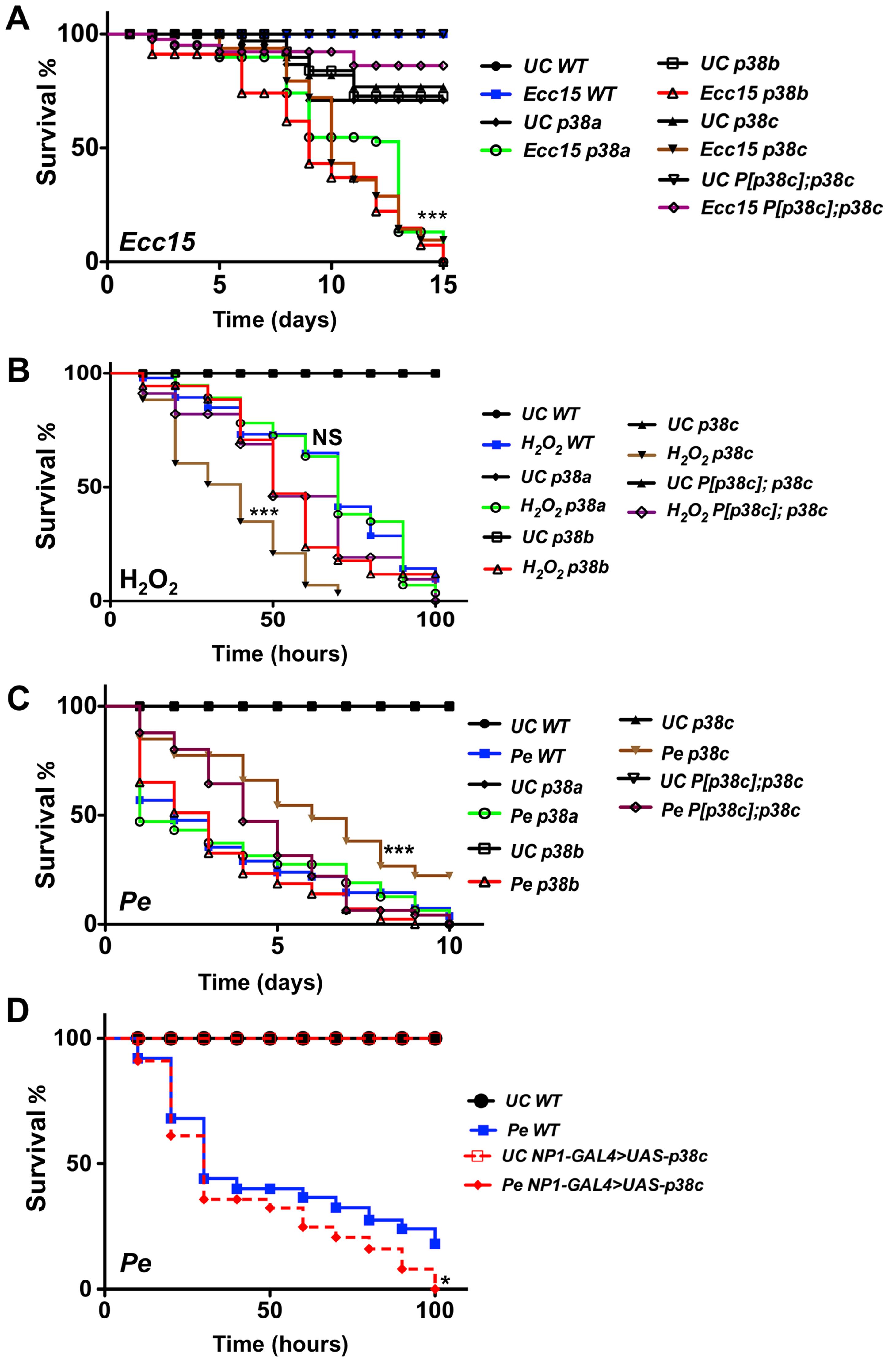 <i>p38c</i> flies were more resistance to <i>P. entomophila</i> infection.