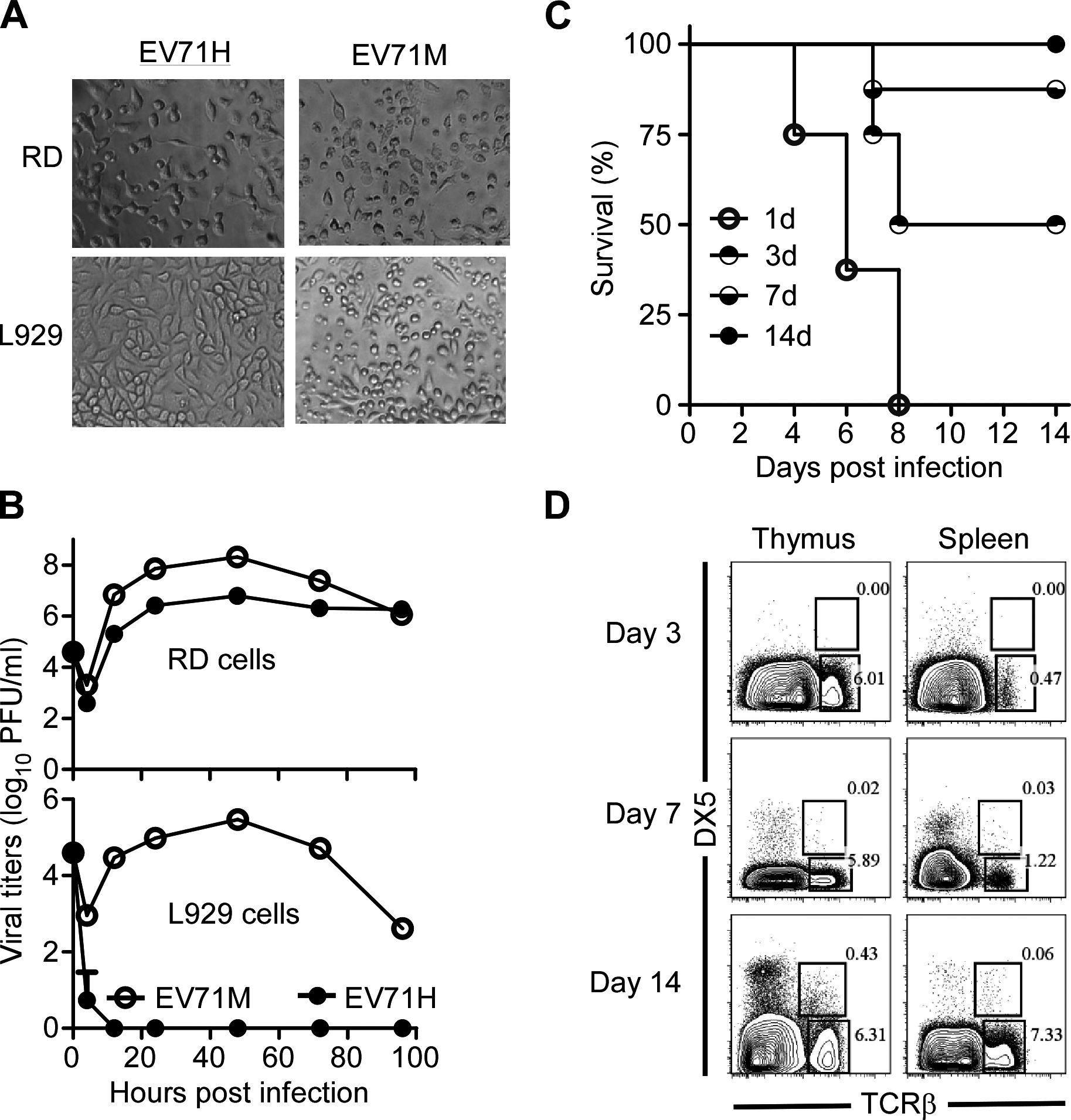 Age-dependent susceptibility of suckling mice to EV71 infection correlates with the immaturity of their immune system.