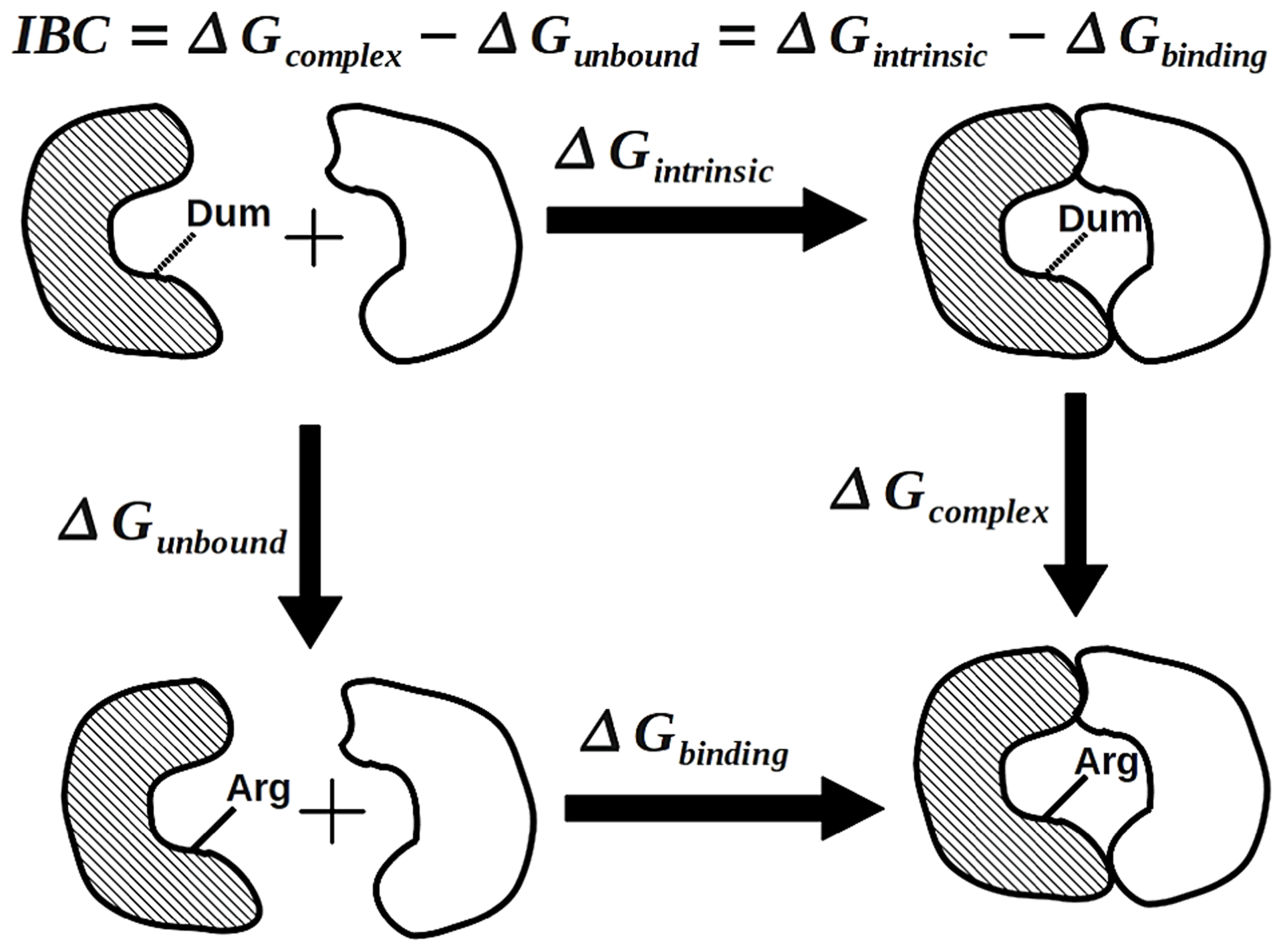 The thermodynamic cycle for the calculation of the intrinsic binding contribution of a protein-protein interfacial residue.