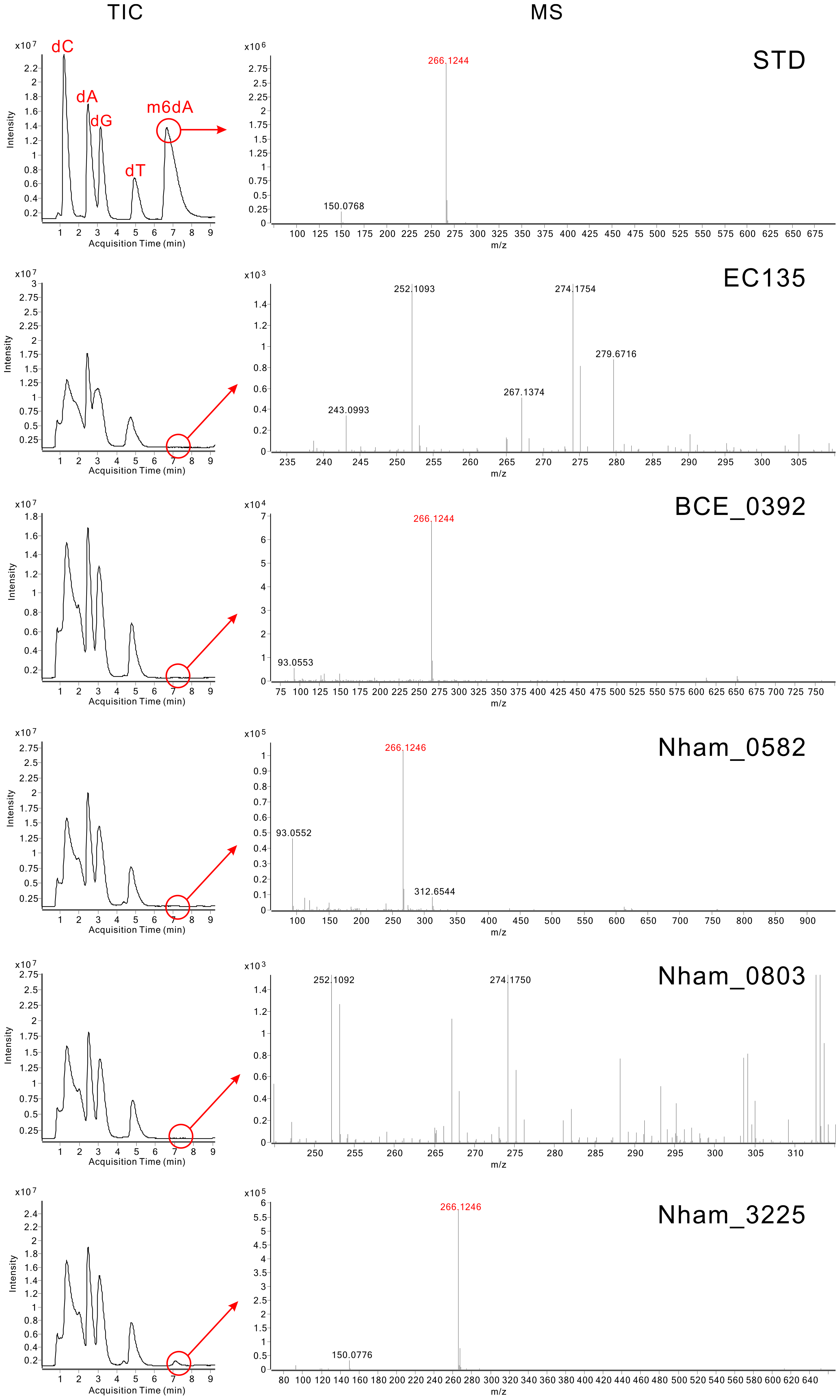 Analysis of m6dA in the DNA of MTases-expressing <i>E. coli</i> strains using HPLC-QTOF/MS.