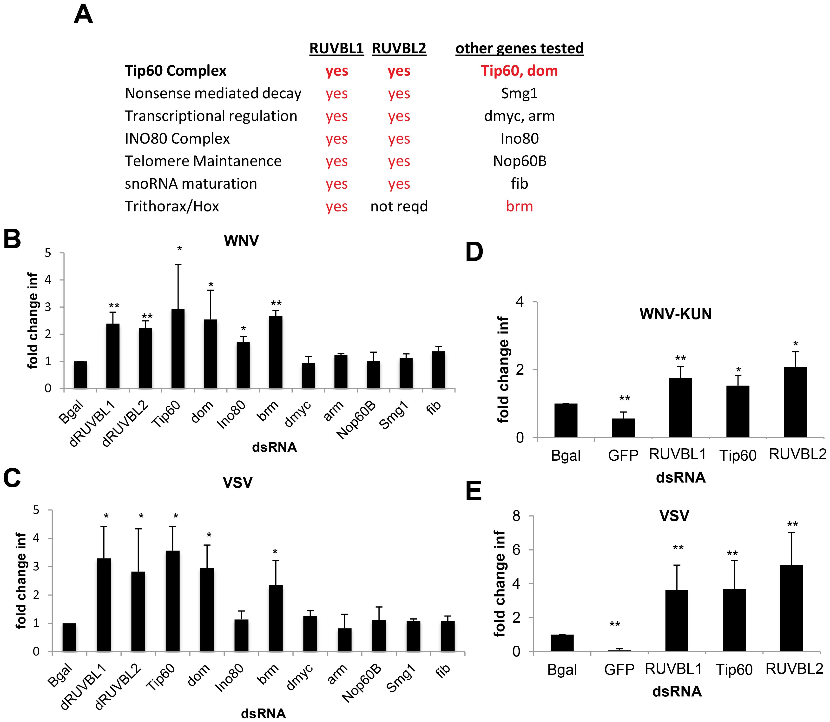 Tip60 complex has antiviral activity.