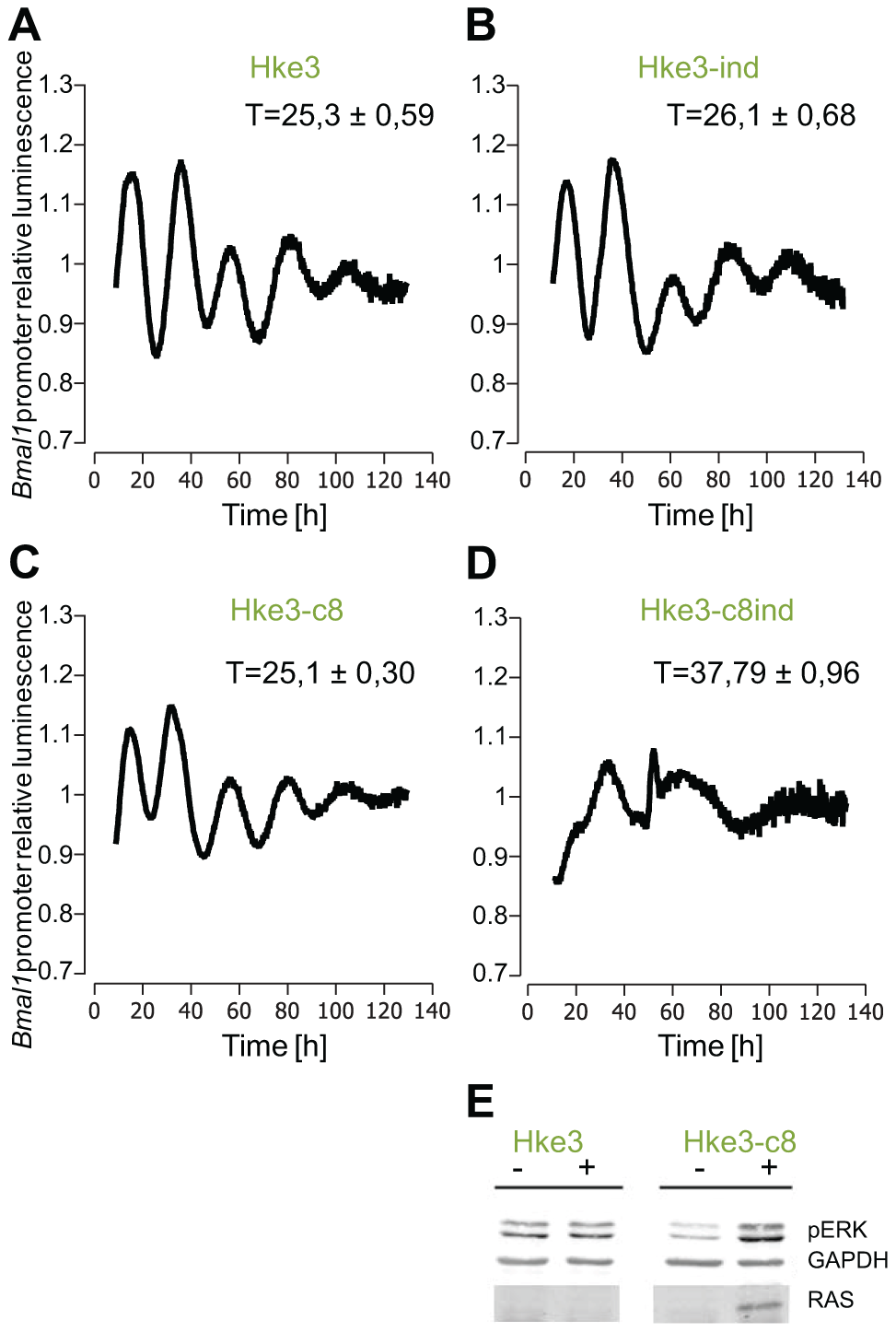 Effect of KRAS induction in HKe3 and HKe3 clone 8 cell lines.