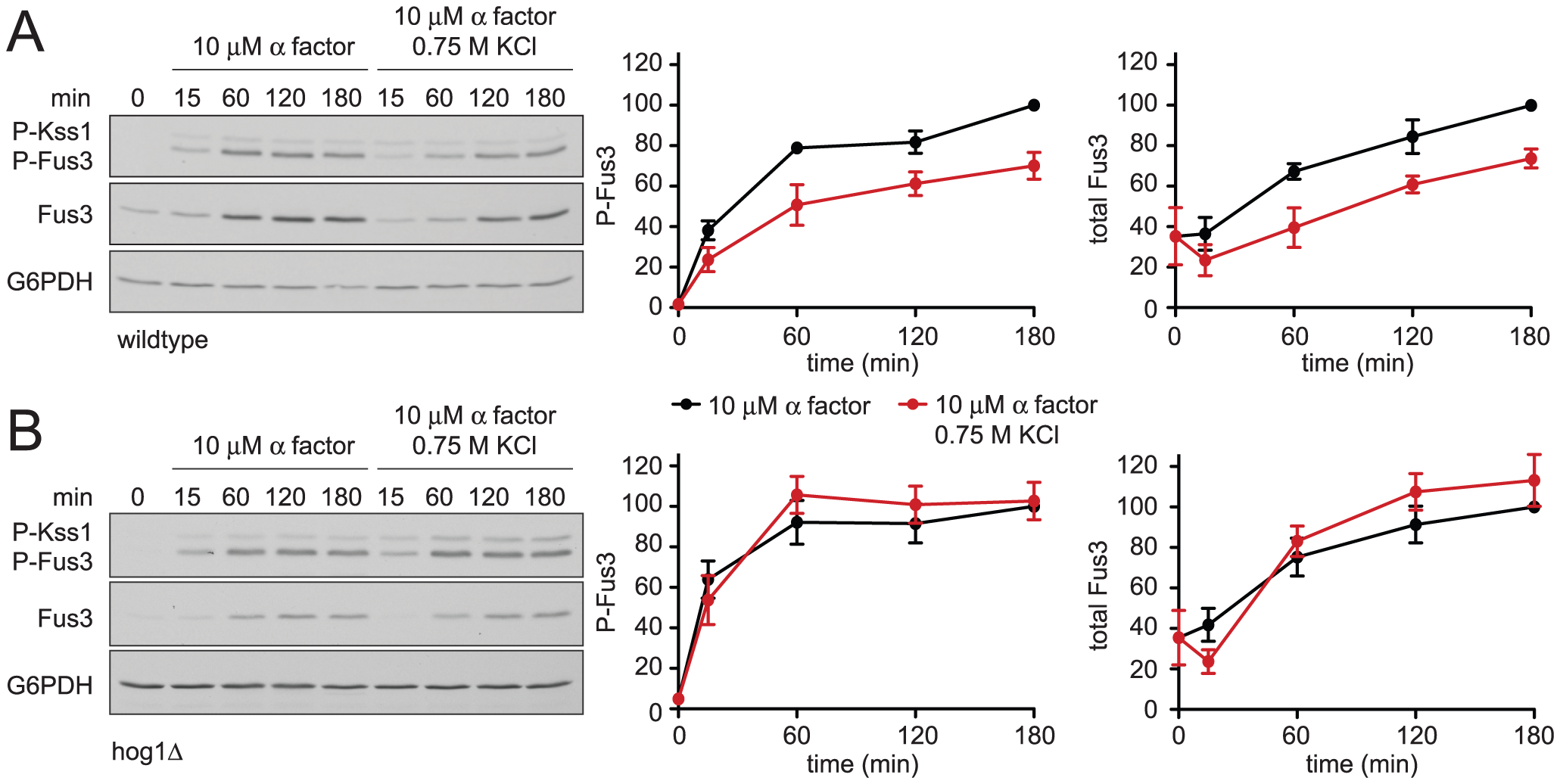 Hyperosmotic stress dampens mating MAPK activation and induction.