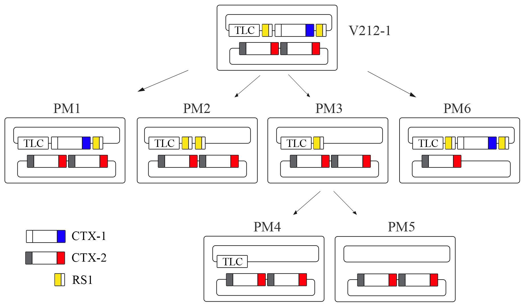 Generation of Wave 2 strains by excision of CTX-1 and RS1 from V212-1.
