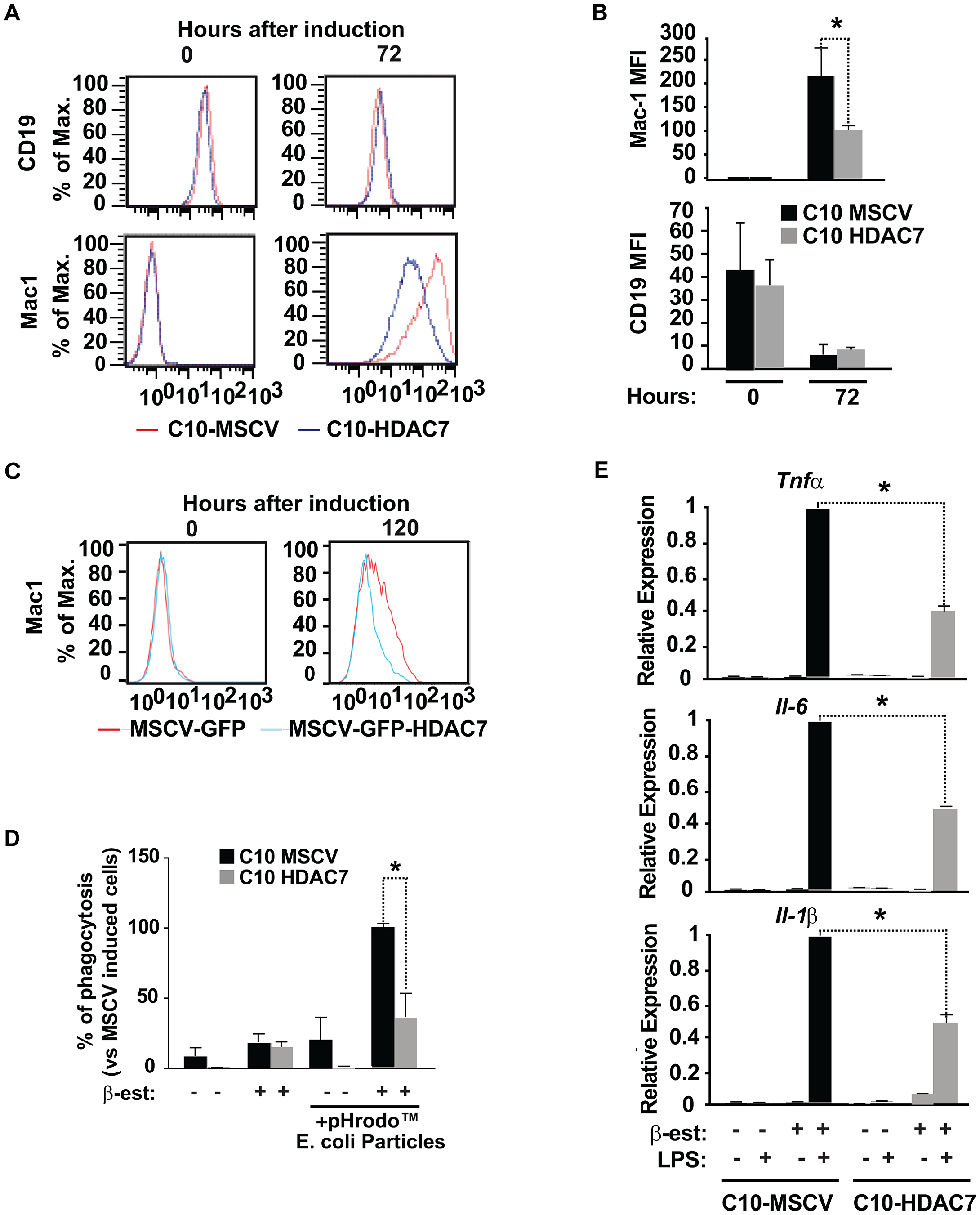 HDAC7 re-expression interferes with the functional properties of the converted macrophages.