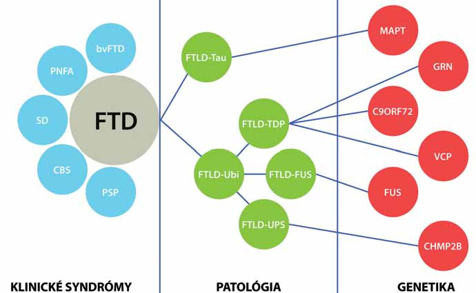 Klinicko-patologické a klinicko-genetické korelácie pri familiárnych FTLD.