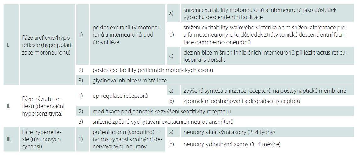 Fáze míšního šoku – patofyziologické mechanizmy.