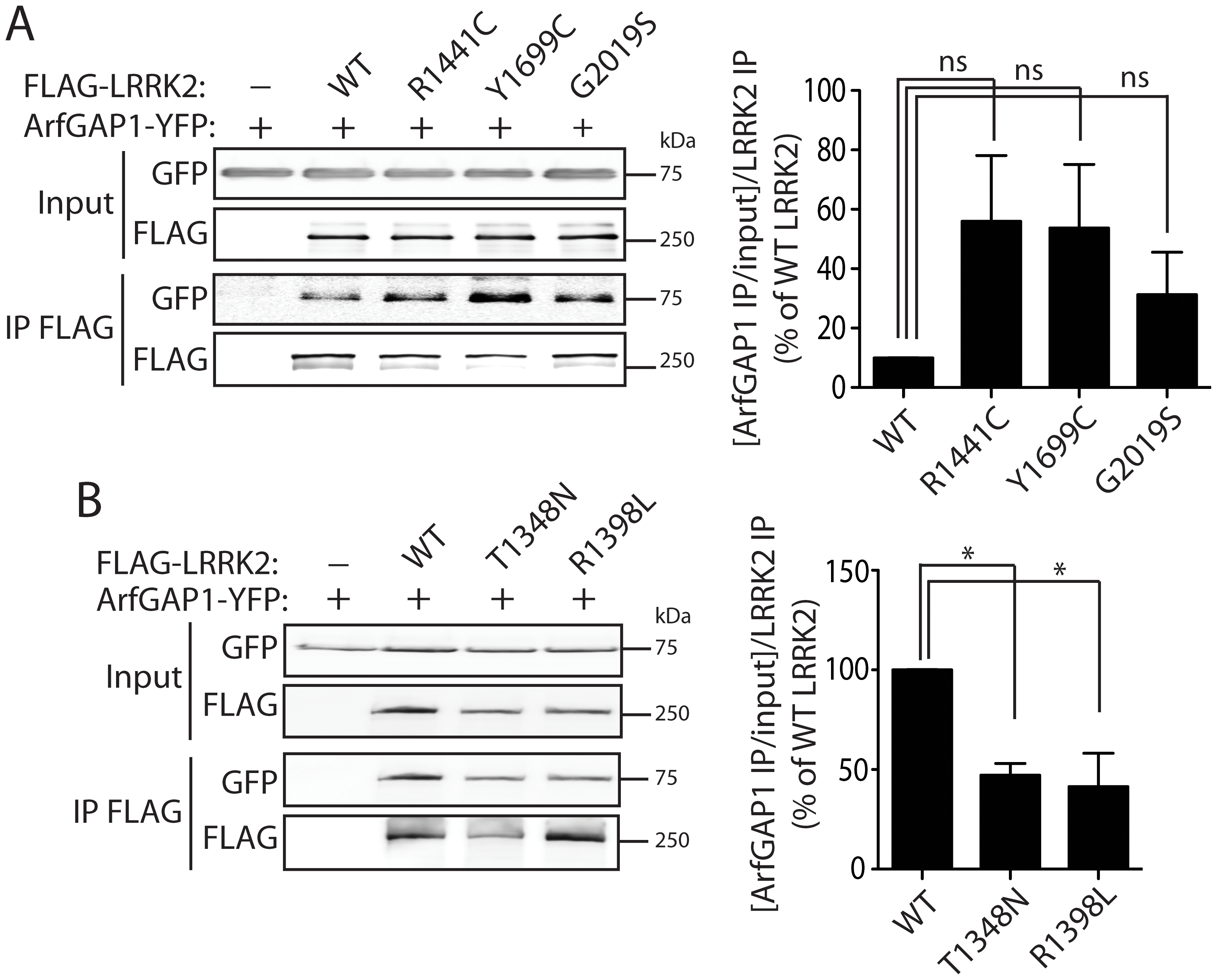 Familial PD–associated and functional mutations in LRRK2 modulate the interaction with ArfGAP1.