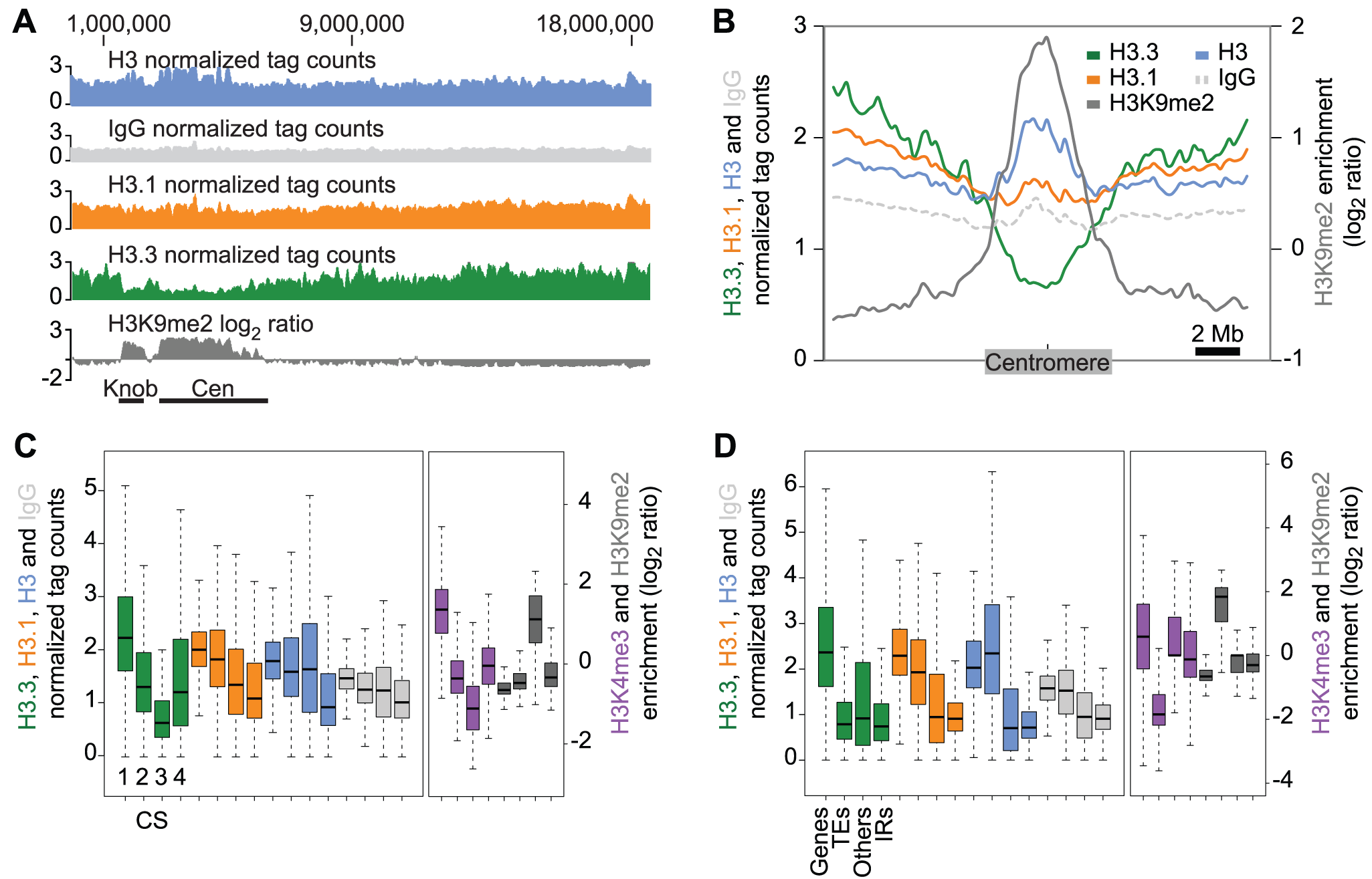 Genomic distribution of H3.3 and H3.1 enrichment over distinct chromatin states and genomic features.