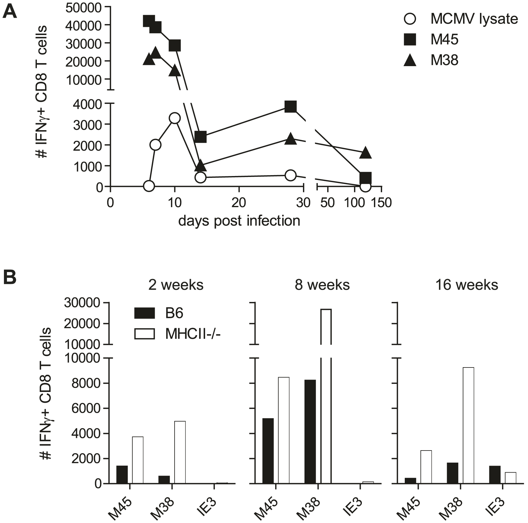 MCMV-specific CD8 T cells isolated from the SG secrete IFNγ.