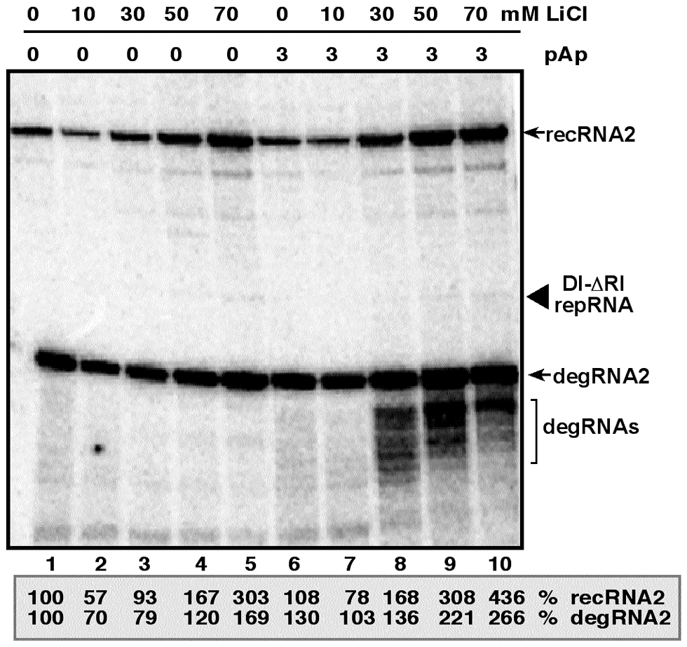 Increased accumulation of TBSV recRNA in <i>N. benthamiana</i> protoplasts by treatment with LiCl and pAp.
