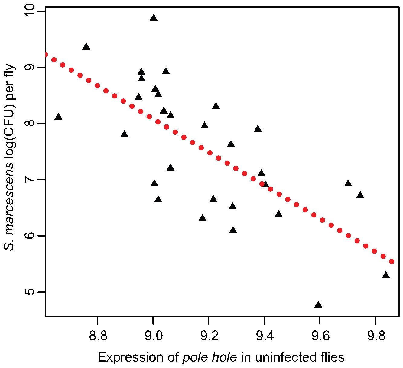 Expression of <i>pole hole</i> correlates with <i>S. marcescens</i> bacterial load.