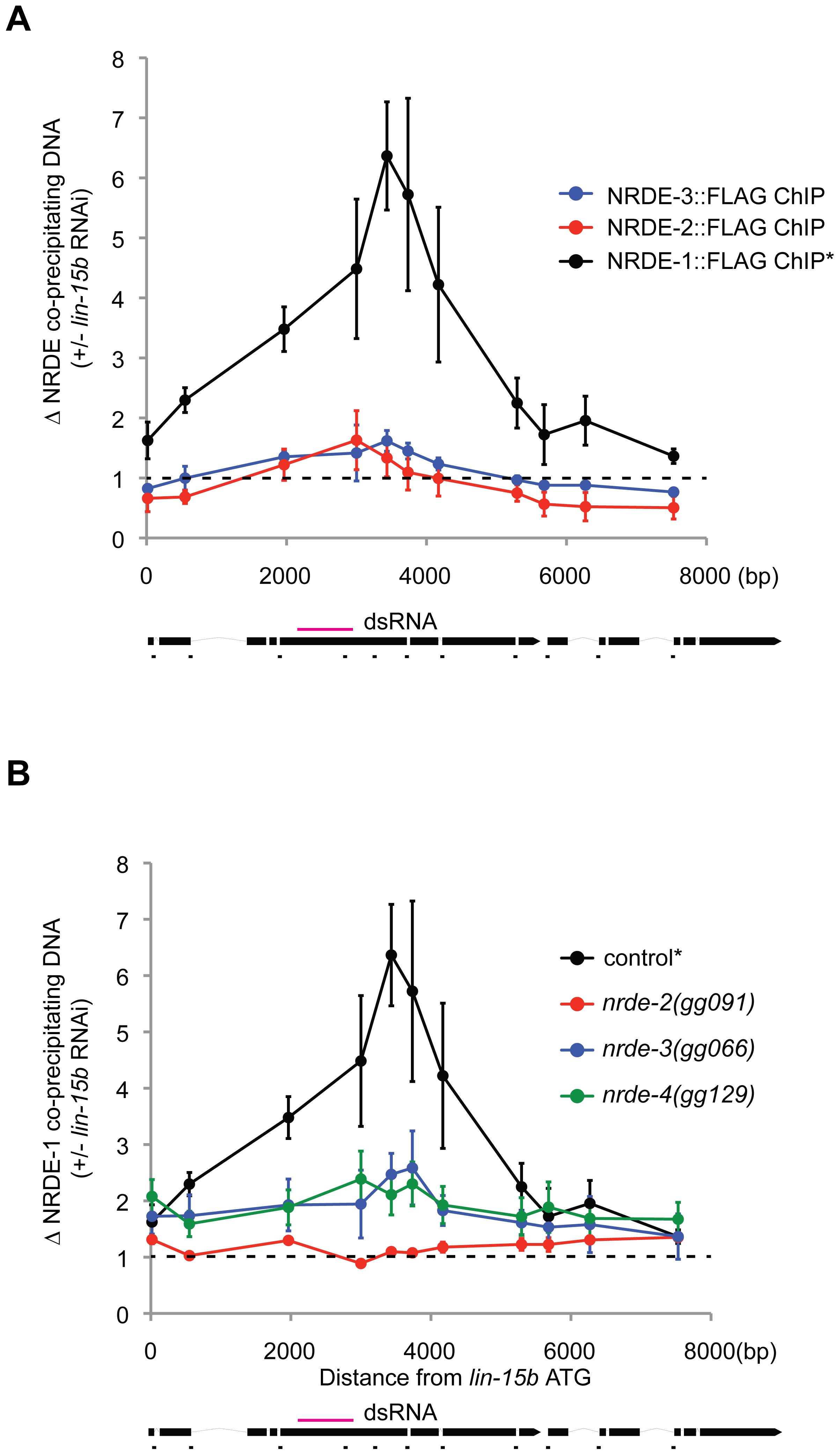 NRDE-1 associates with chromatin at genomic loci targeted by RNAi.