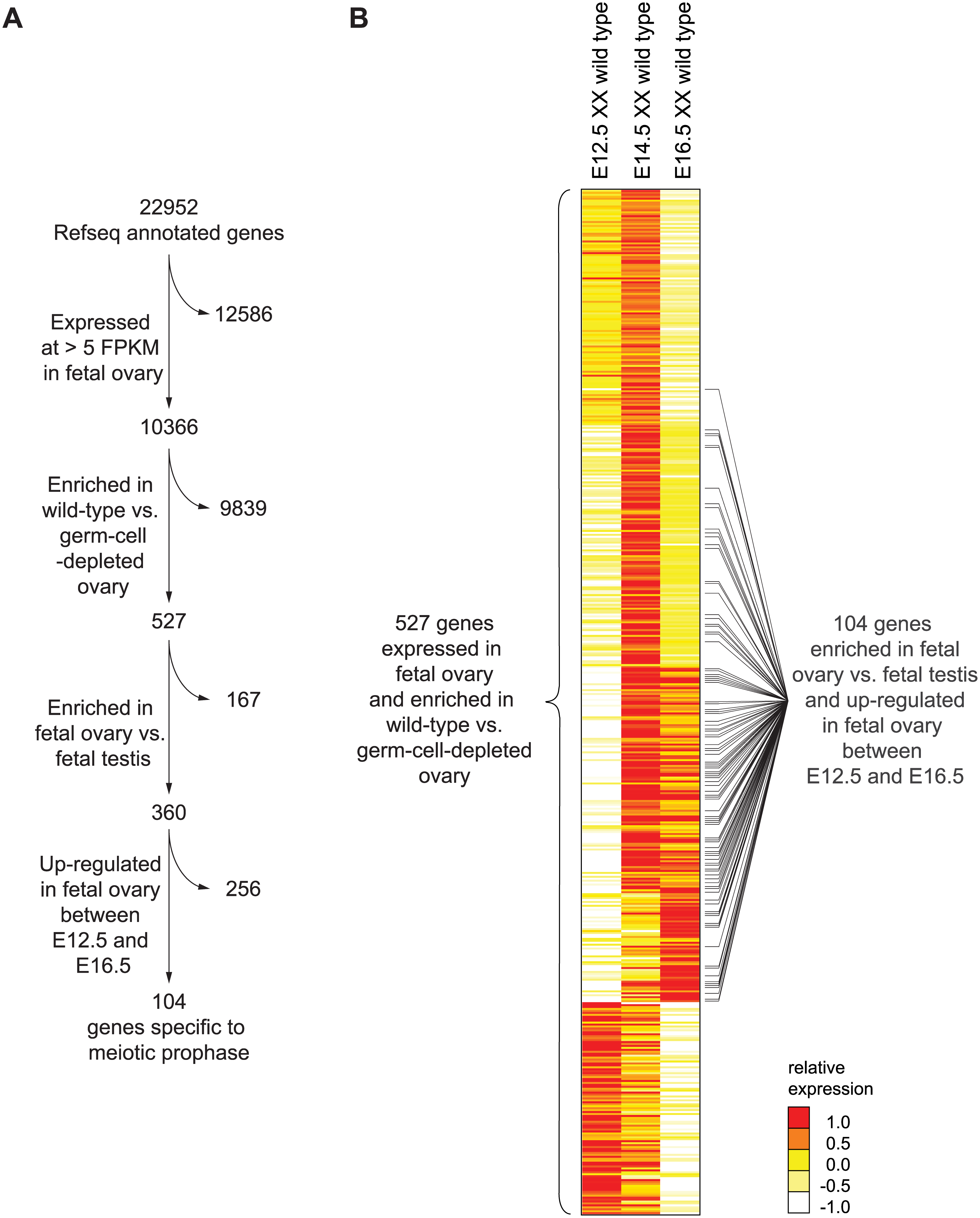 RNA-seq analysis of wild-type and germ-cell-depleted fetal gonads identifies a meiotic prophase-specific gene set.